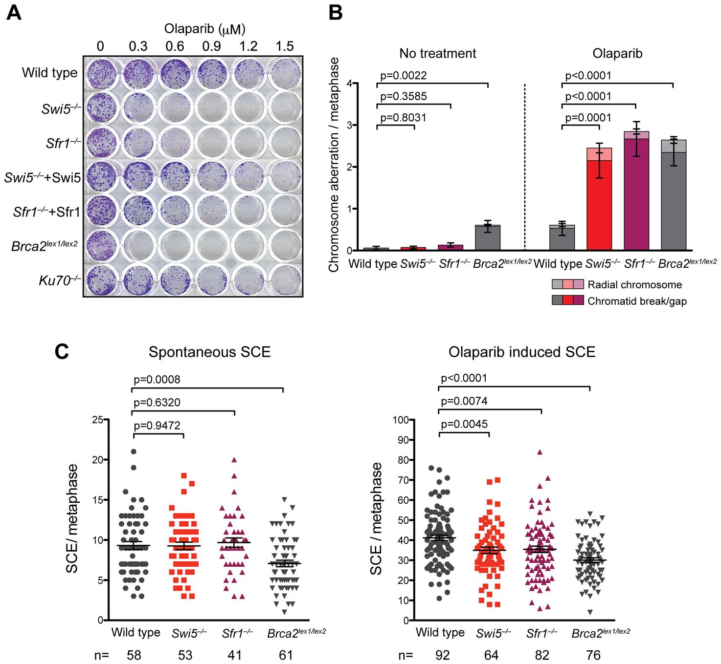 <i>Swi5</i><sup>−/−</sup> and <i>Sfr1</i><sup>−/−</sup> cells are sensitive to Parp inhibiton.