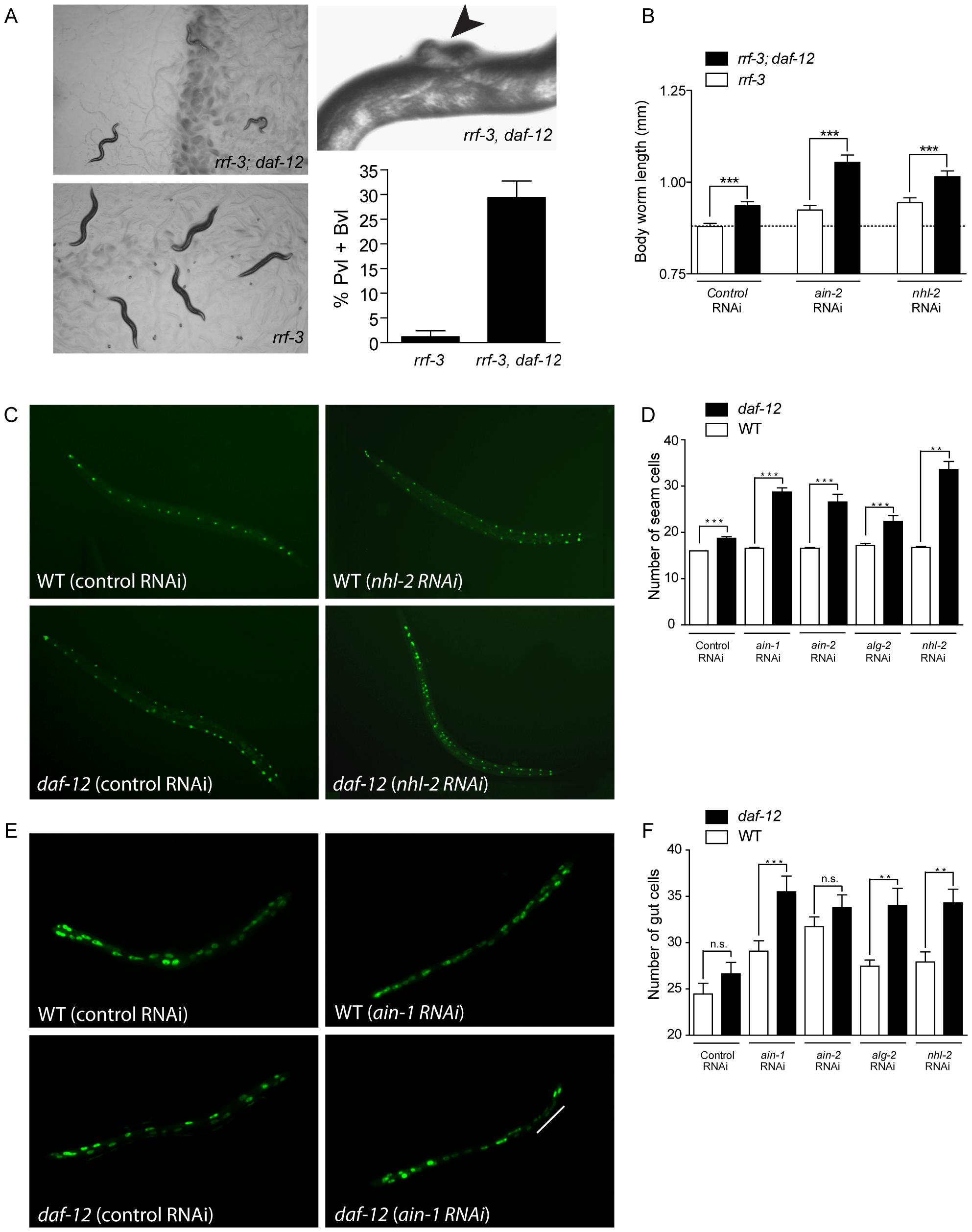<i>daf-12(0)</i> worms are sensitized to changes in miRISC activity.