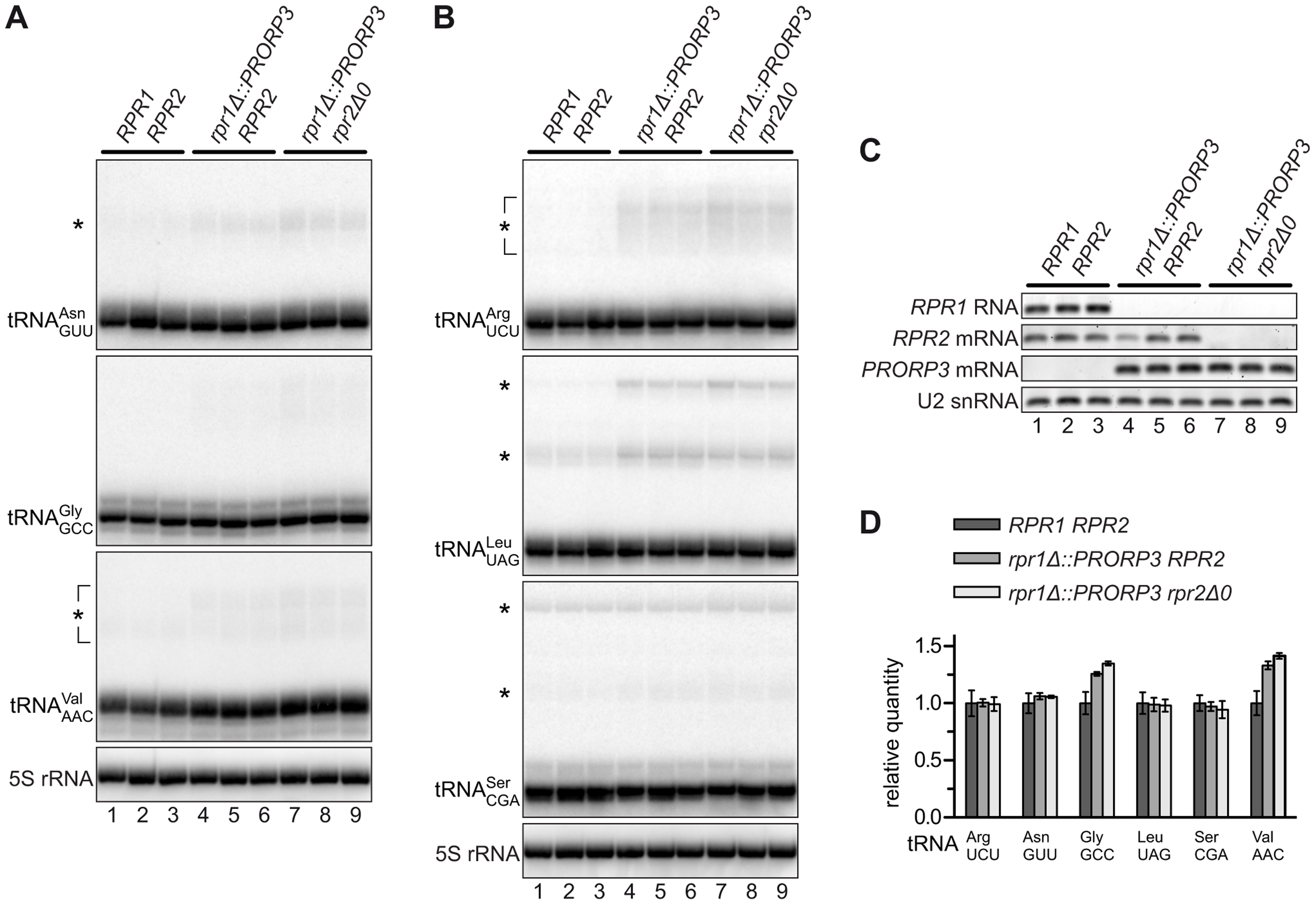 tRNAs in RNase P-swapped yeast strains.
