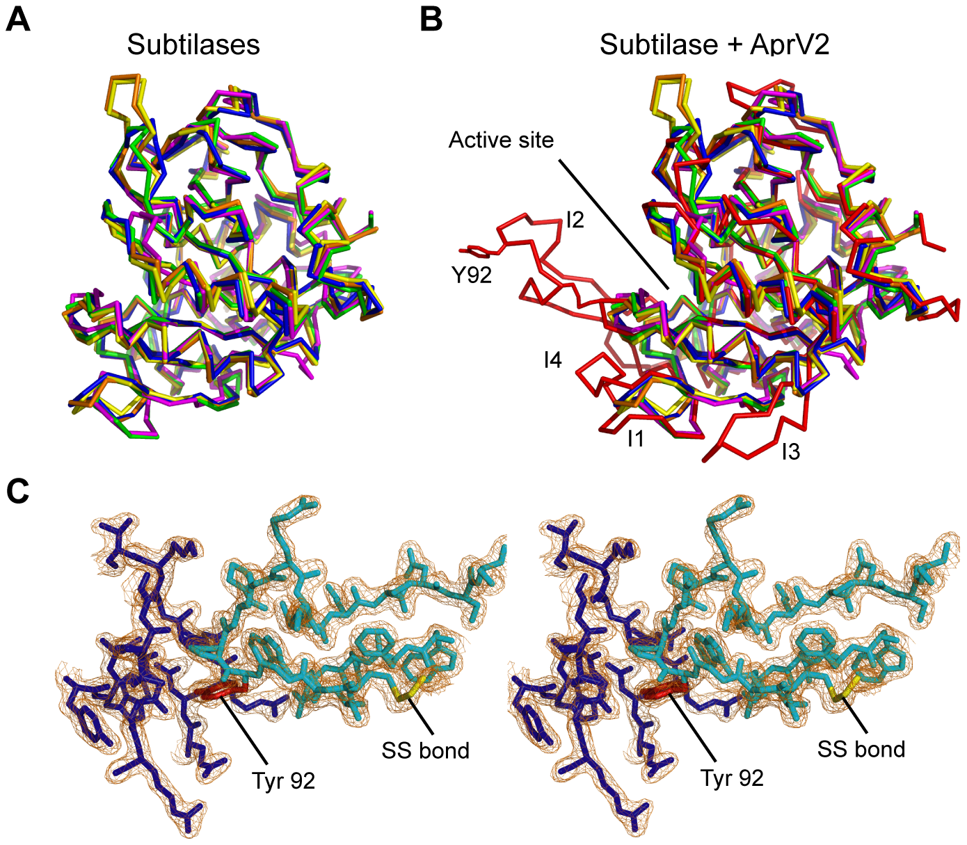 AprV2 contains a novel disulfide tethered loop.