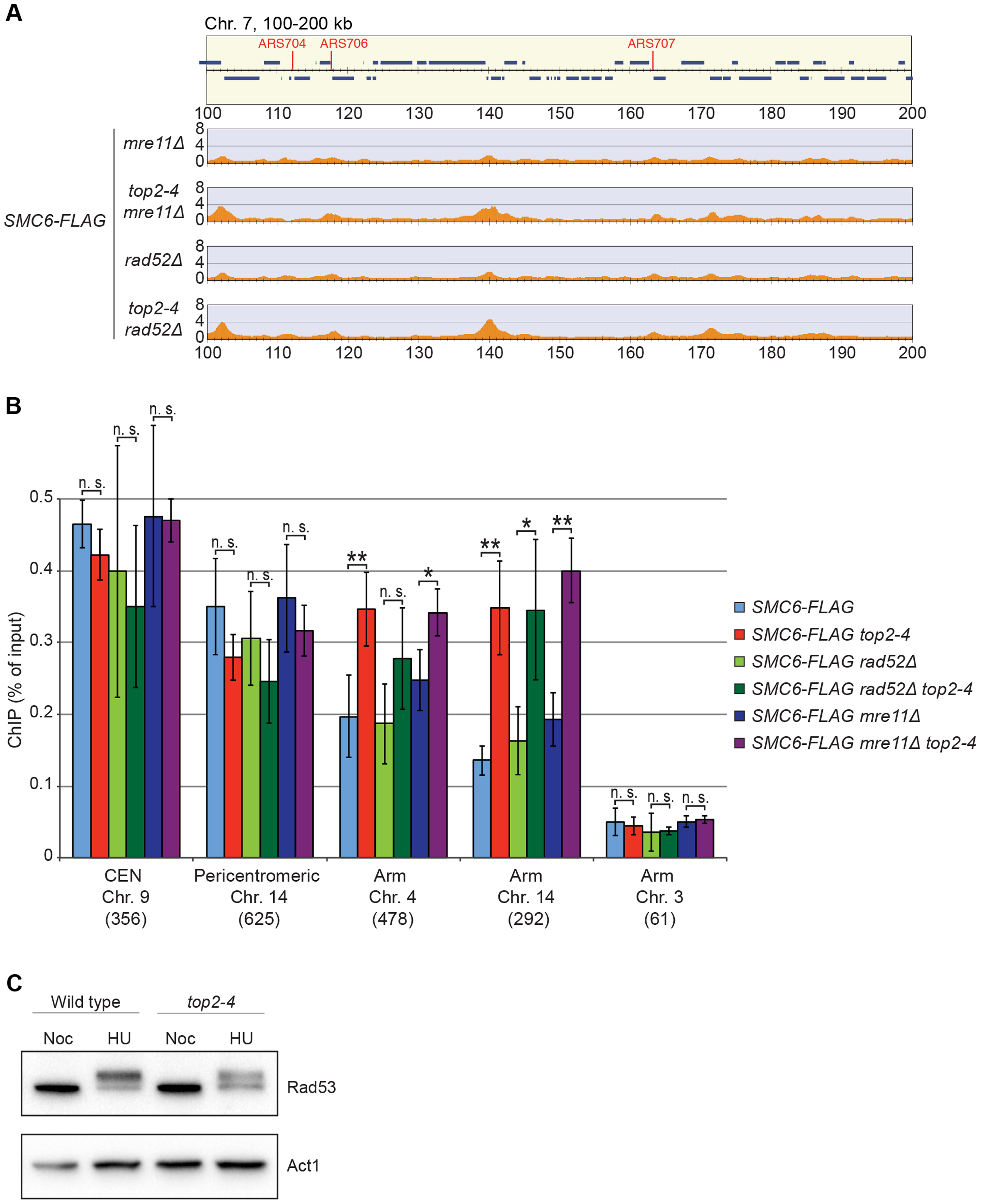 The chromosomal association of Smc6 does not depend on DSB formation or recombination.