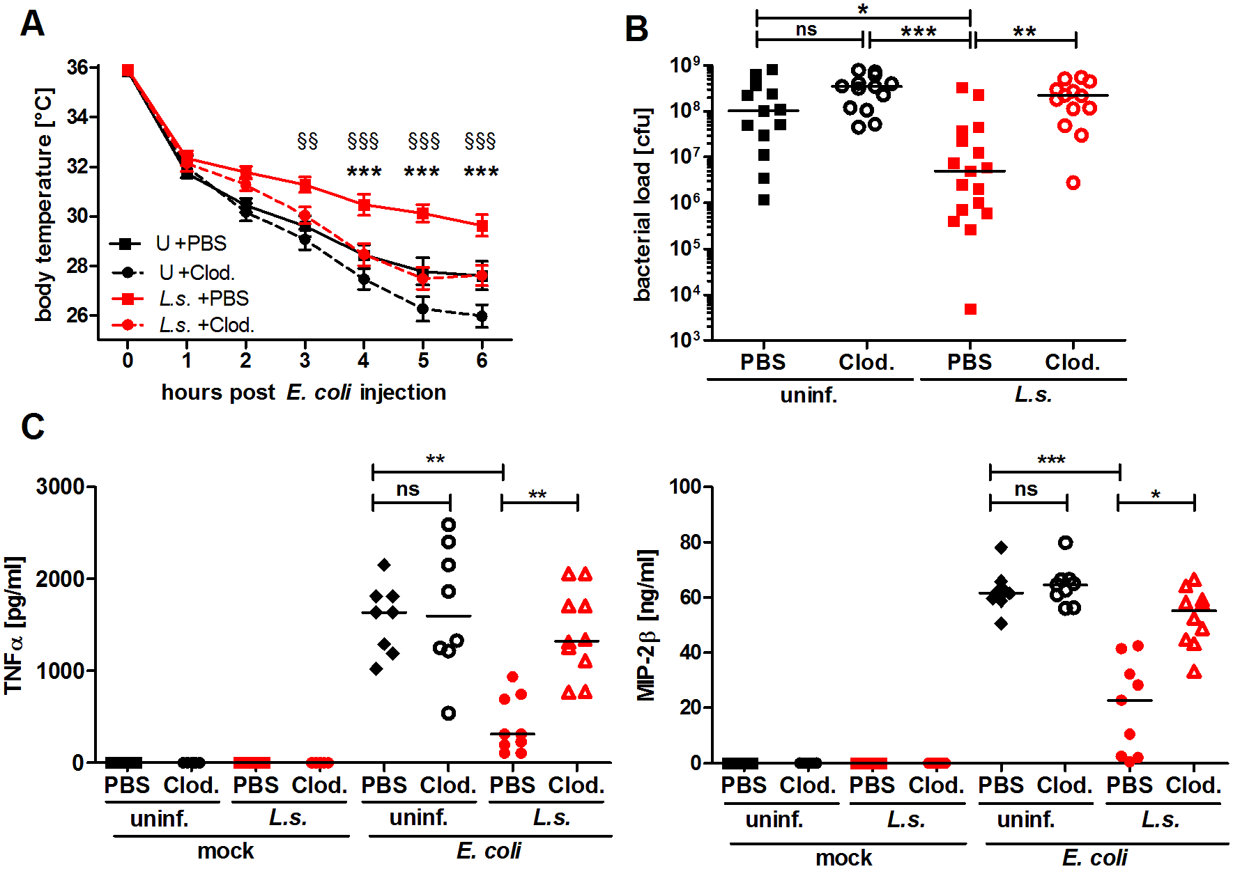 Macrophage depletion renders <i>L. sigmodontis</i>-infected mice susceptible to <i>E. coli</i>-induced sepsis.