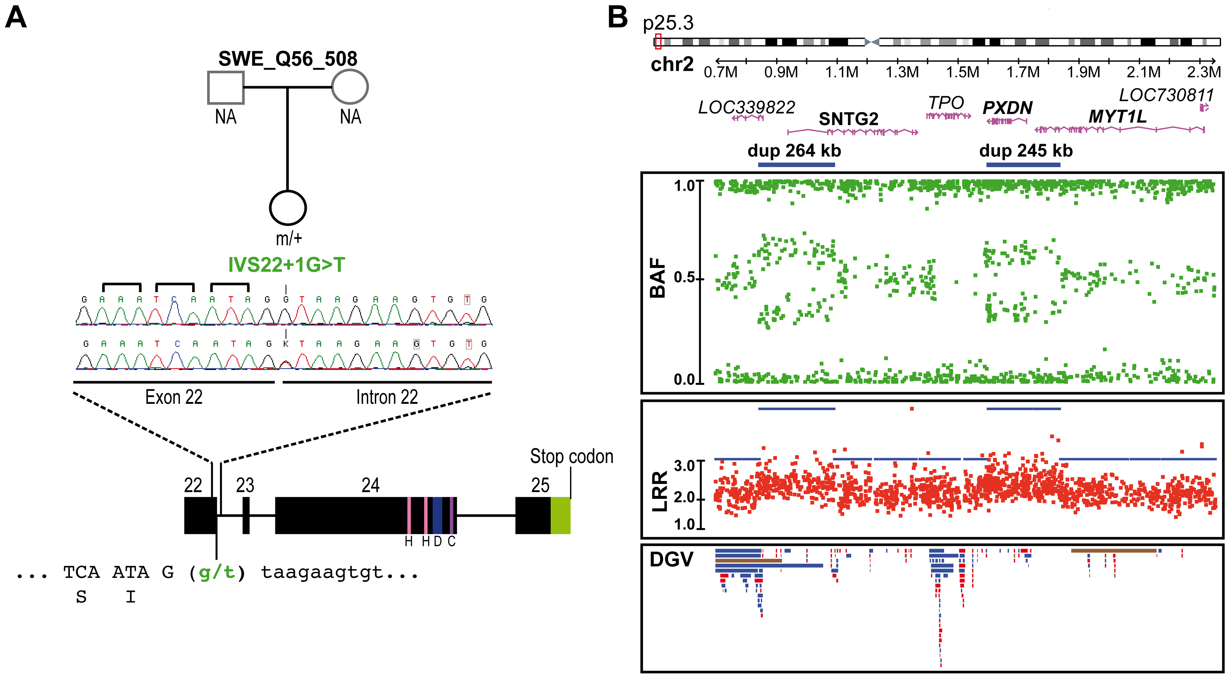 Genetic alterations identified in the control subject SWE_Q56_508.