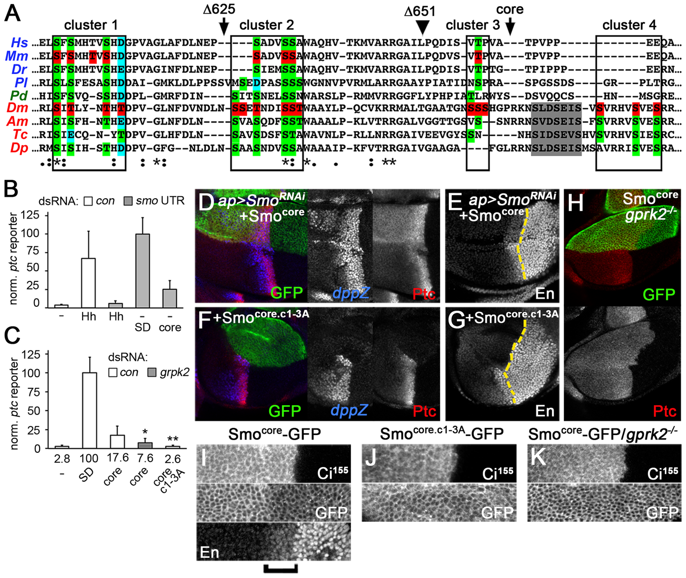 The conserved core of Smo is a GRK-regulated, signaling-competent protein.