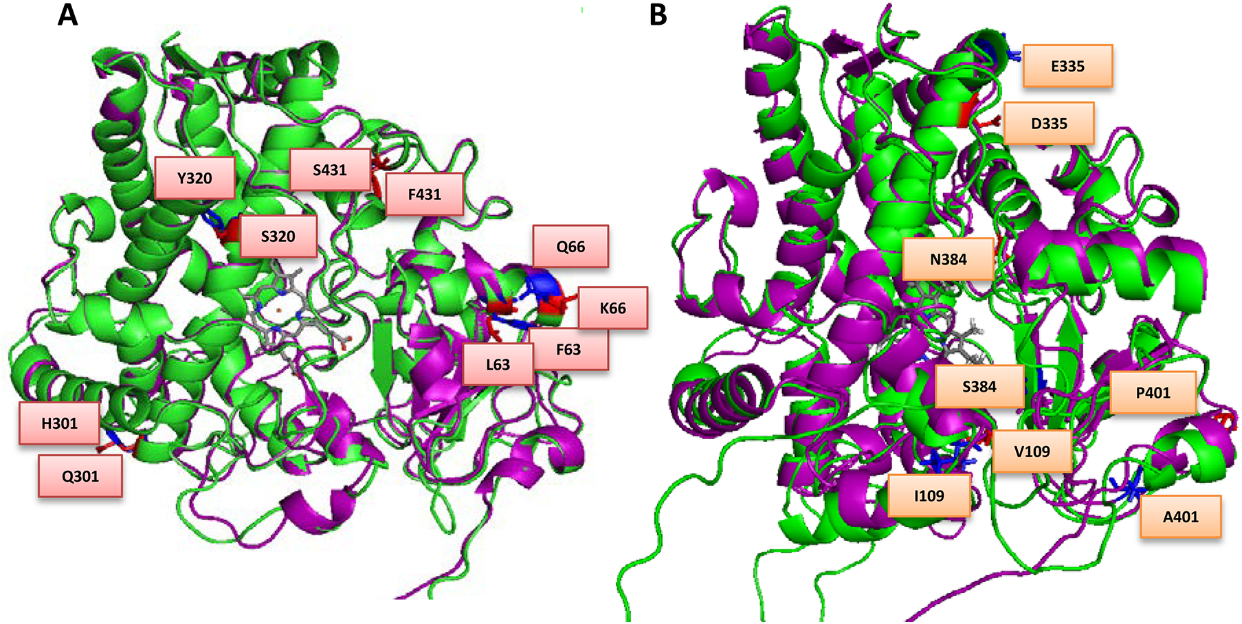 Overlay of (A) MALCYP6P9a (green helices) and FANGCYP6P9a (purple helices) and (B) MALCYP6P9b (green helices) and FANGCYP6P9b (purple helices) showing amino acid residues changes.
