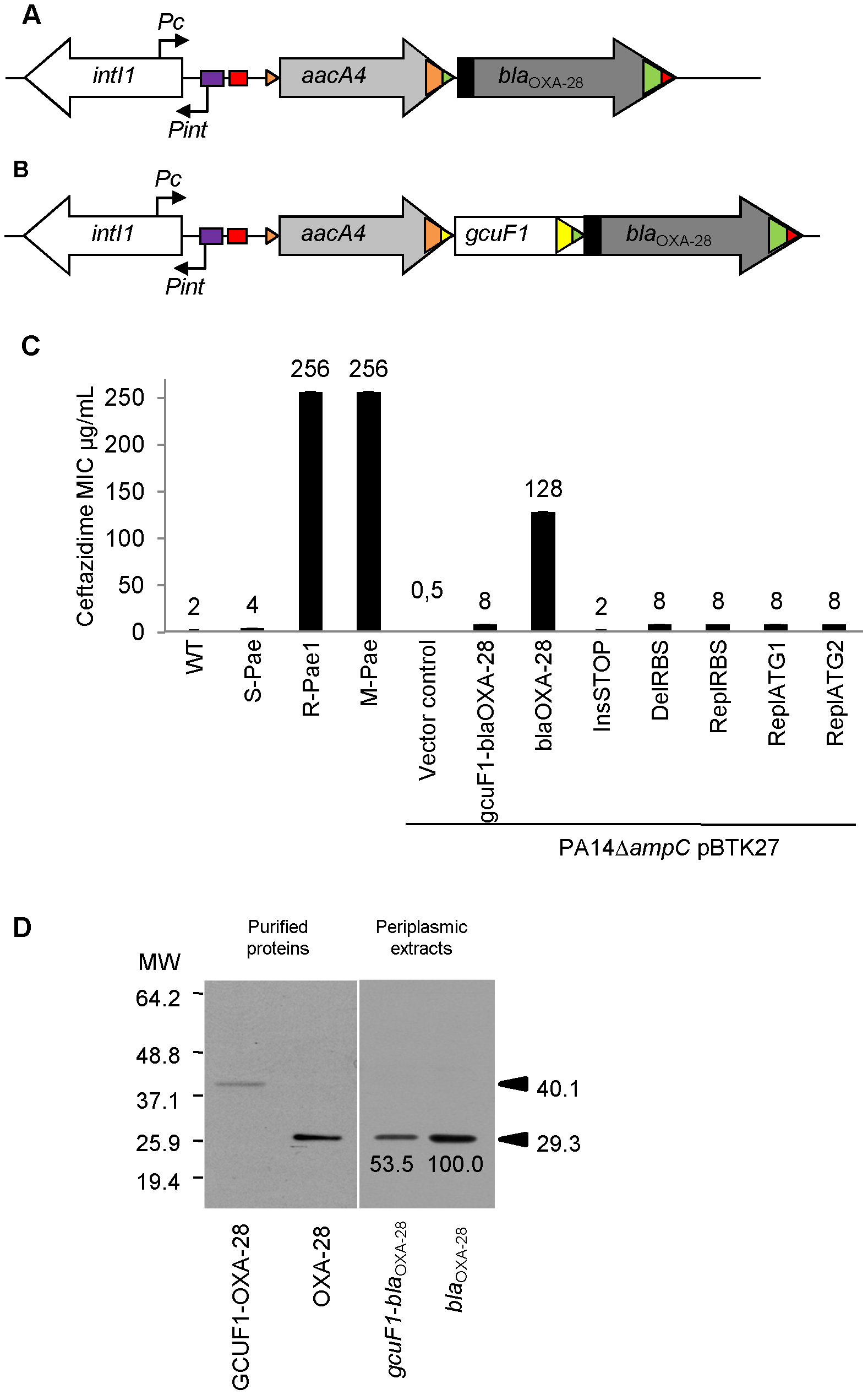 <i>gcuF1</i> cassette insertion modulates the resistance to ceftazidime.
