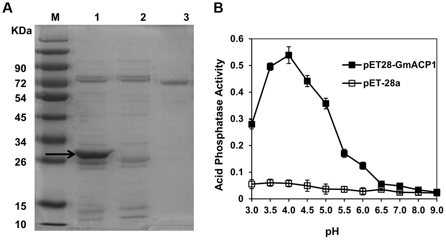 Expression of <i>GmACP1</i> in <i>E. coli</i>.