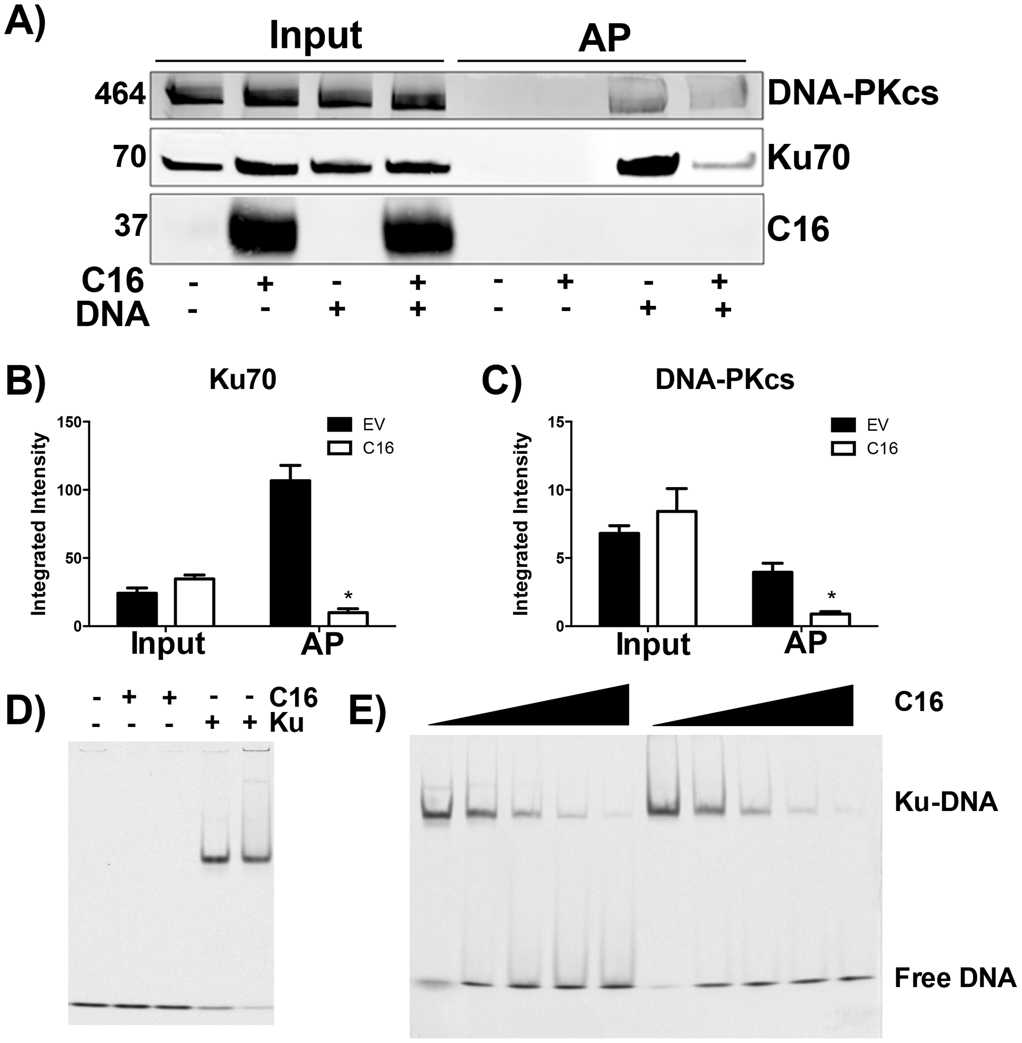 C16 affects binding of DNA-PK to DNA.