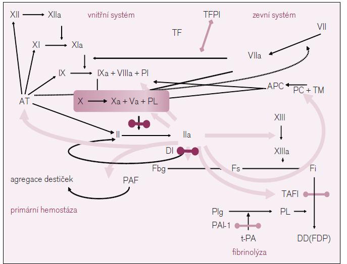 Schéma koagulace v s vyznačením místa účinku nových antitrombotik.