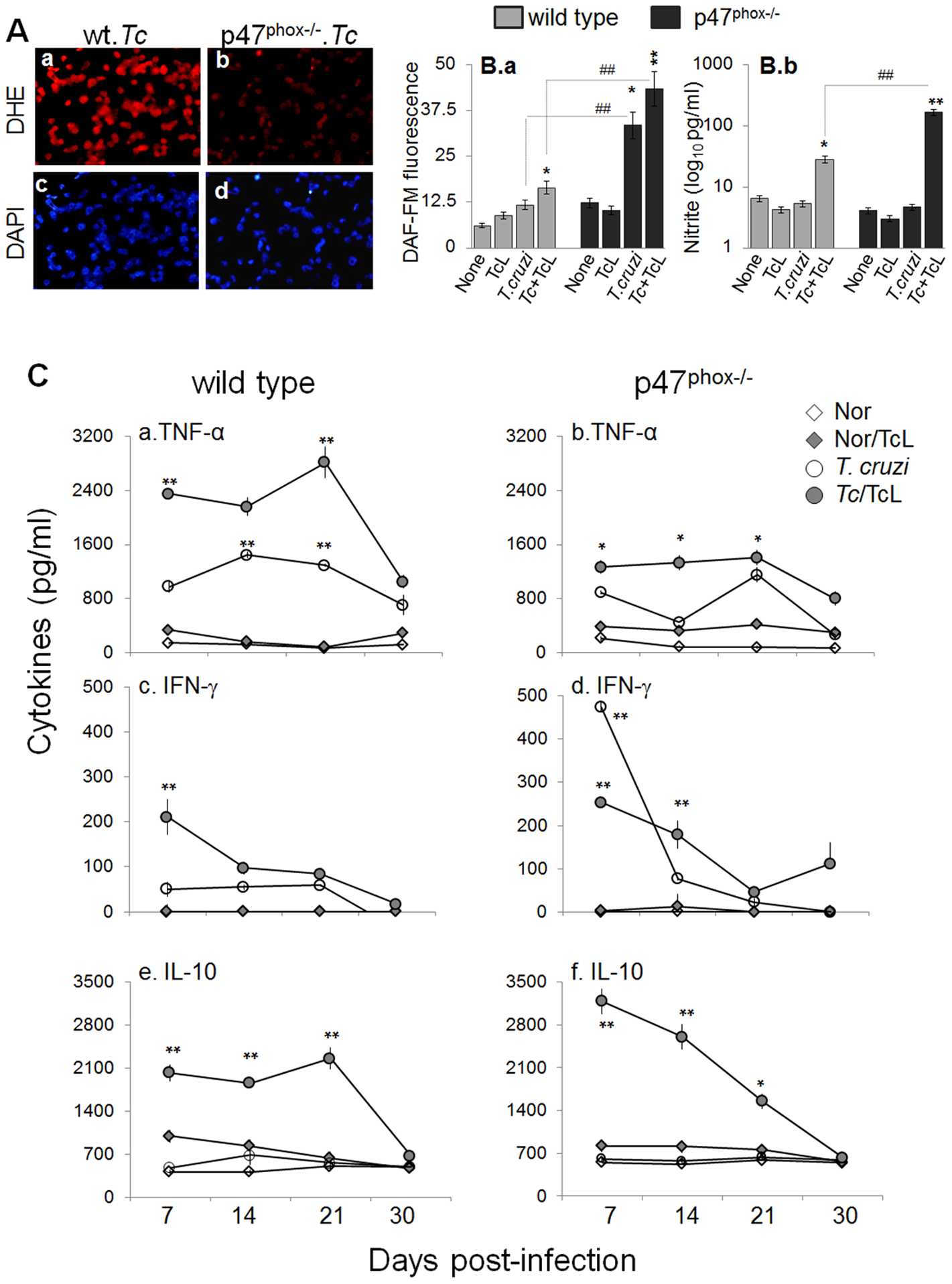 <i>In vivo</i> ROS, nitric oxide, and cytokine profile in p47<sup>phox−/−</sup> mice infected with <i>T. cruzi</i>.