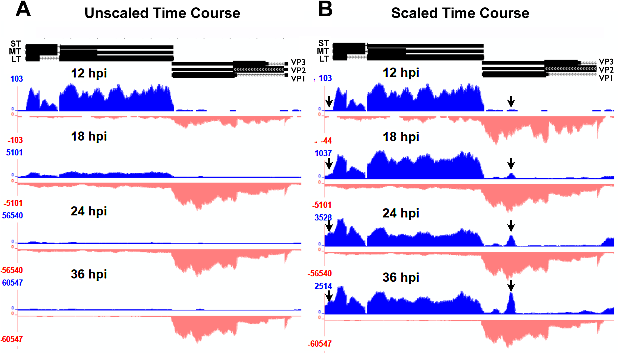 Alignment of time course reads to the Py59RA genome.