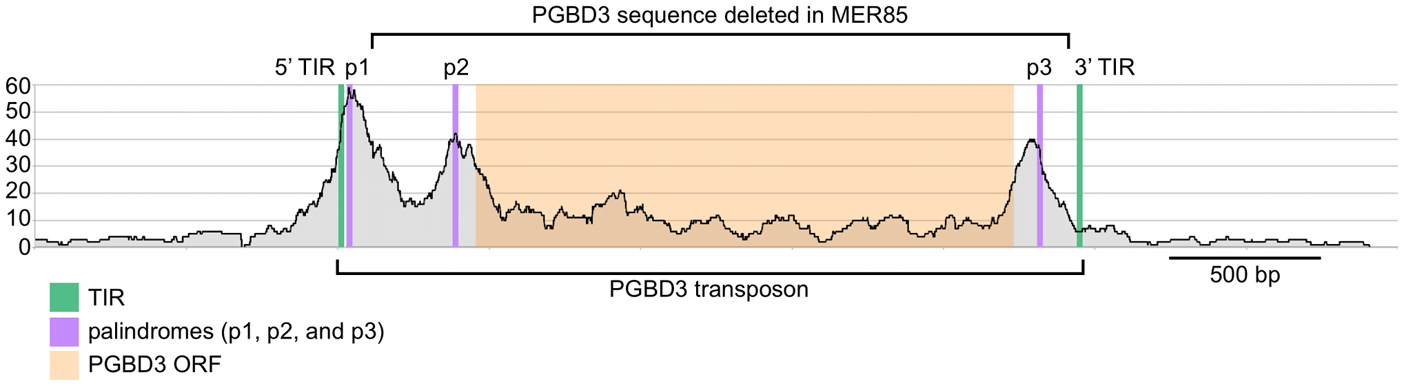 Fragment overlaps in the vicinity of the PGBD3 transposon reveal strong binding near each of three palindromes.