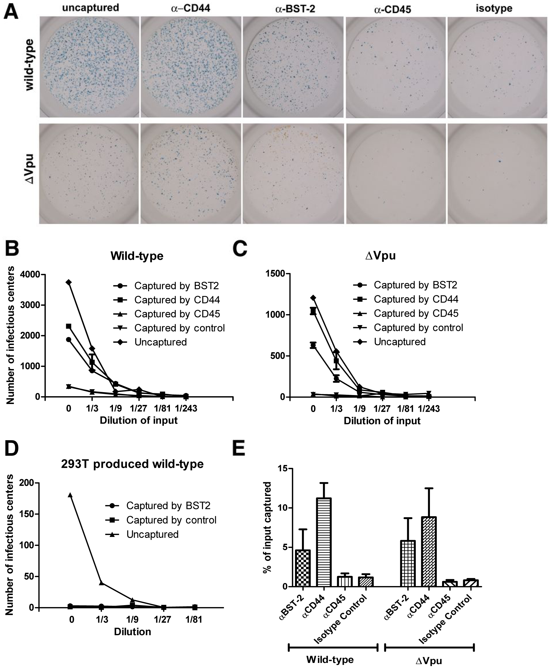 Capture of infectious HIV-1 virions using antibody to BST-2.