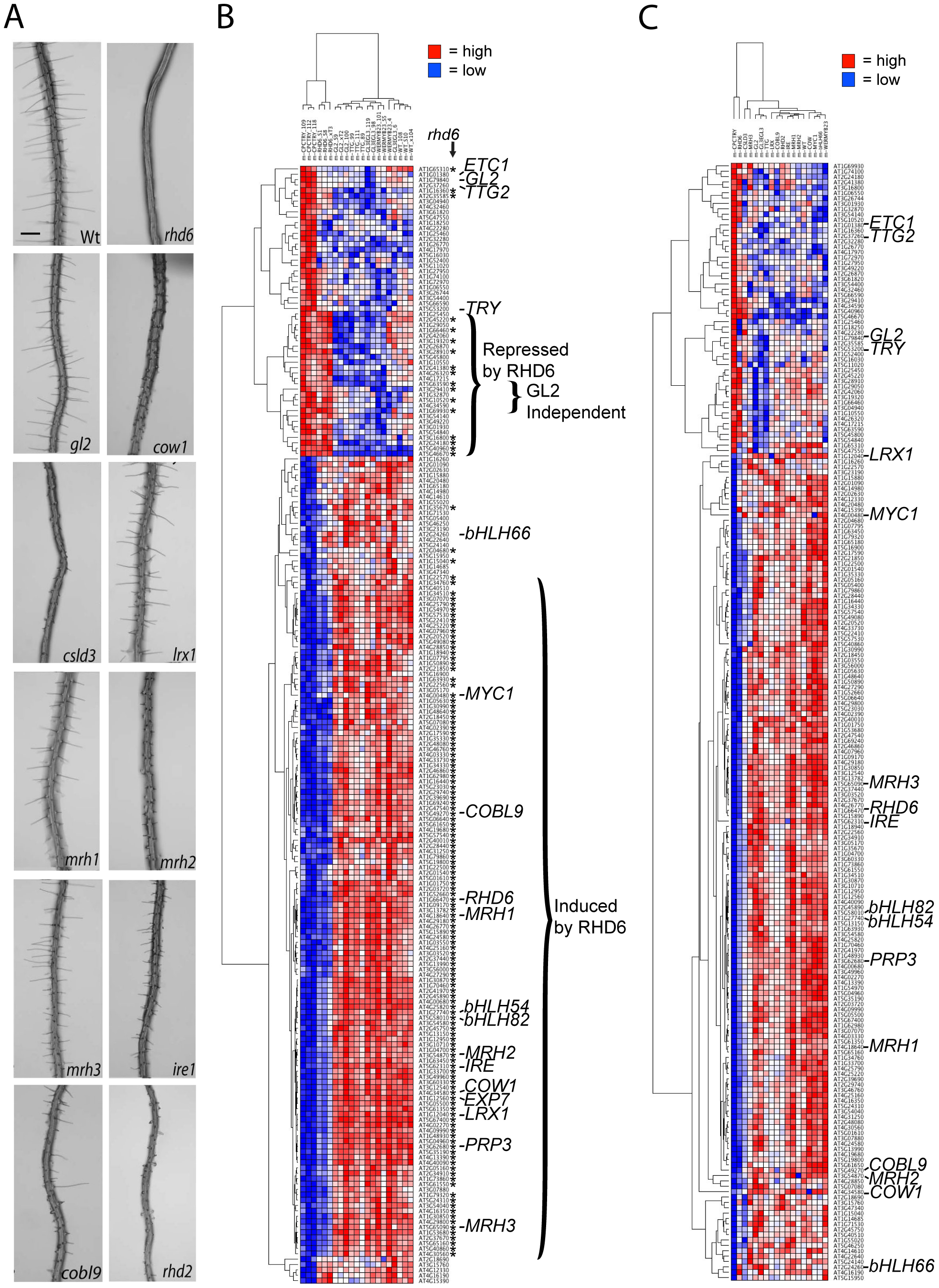 Effect of mutations on expression of the 208 core root epidermal genes.