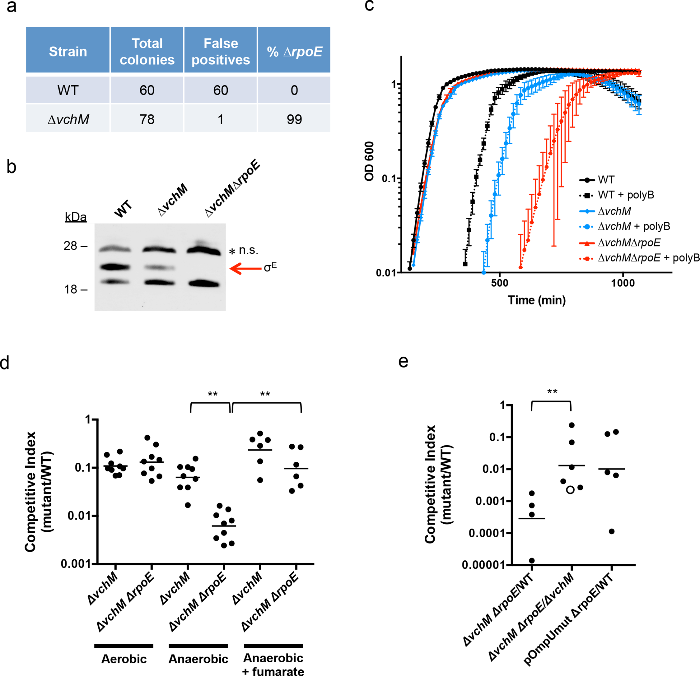 Deletion of <i>vchM</i> suppresses the essentiality of <i>rpoE</i> but <i>∆vchM ∆rpoE</i> mutants show impaired growth under stress conditions.