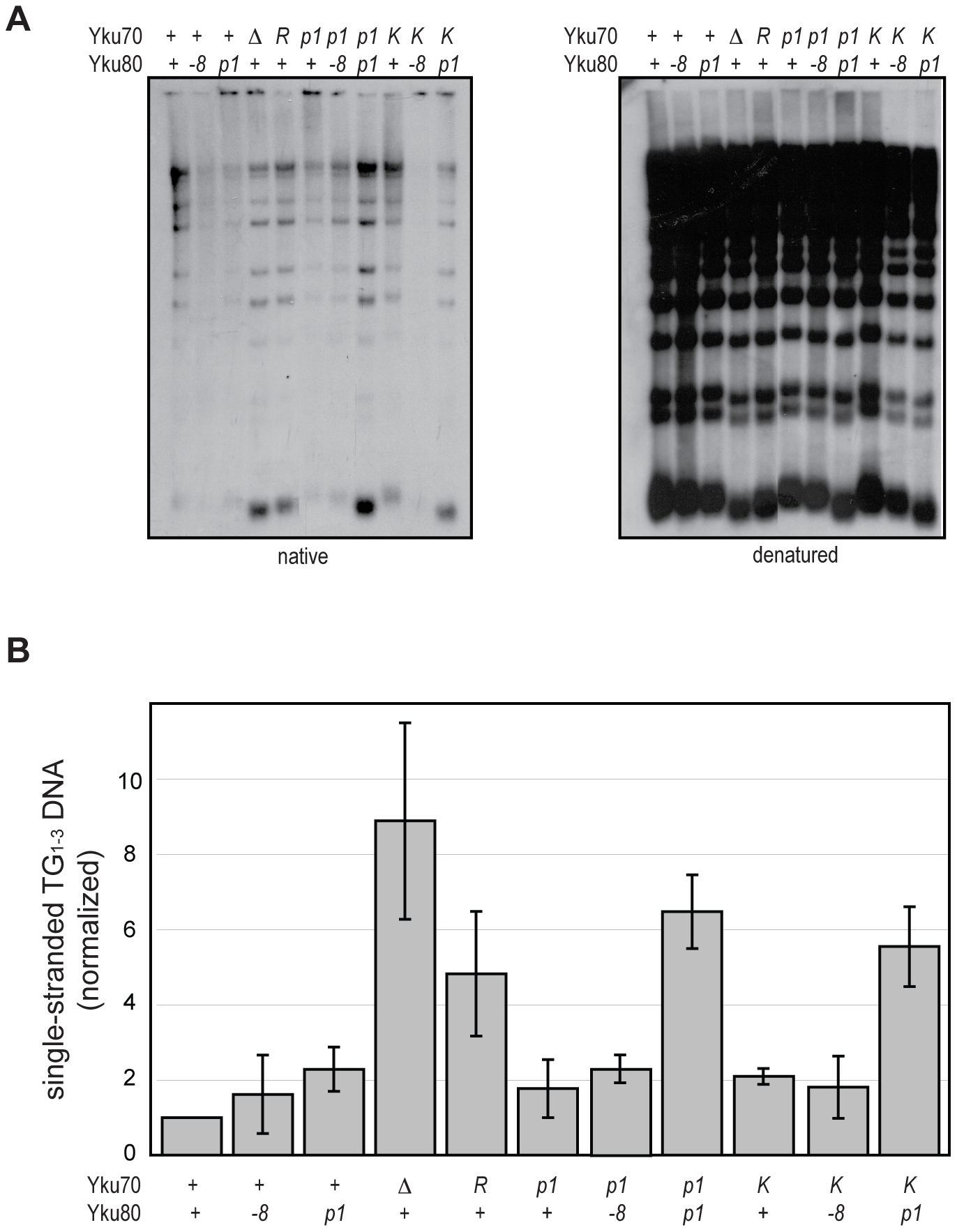 DNA end binding–defective mutants are deficient for telomeric end protection.