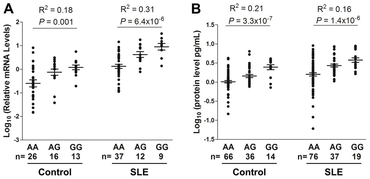 Dose-dependent association of rs3122605 risk G-allele with elevated levels of <i>IL10</i> mRNA and protein.