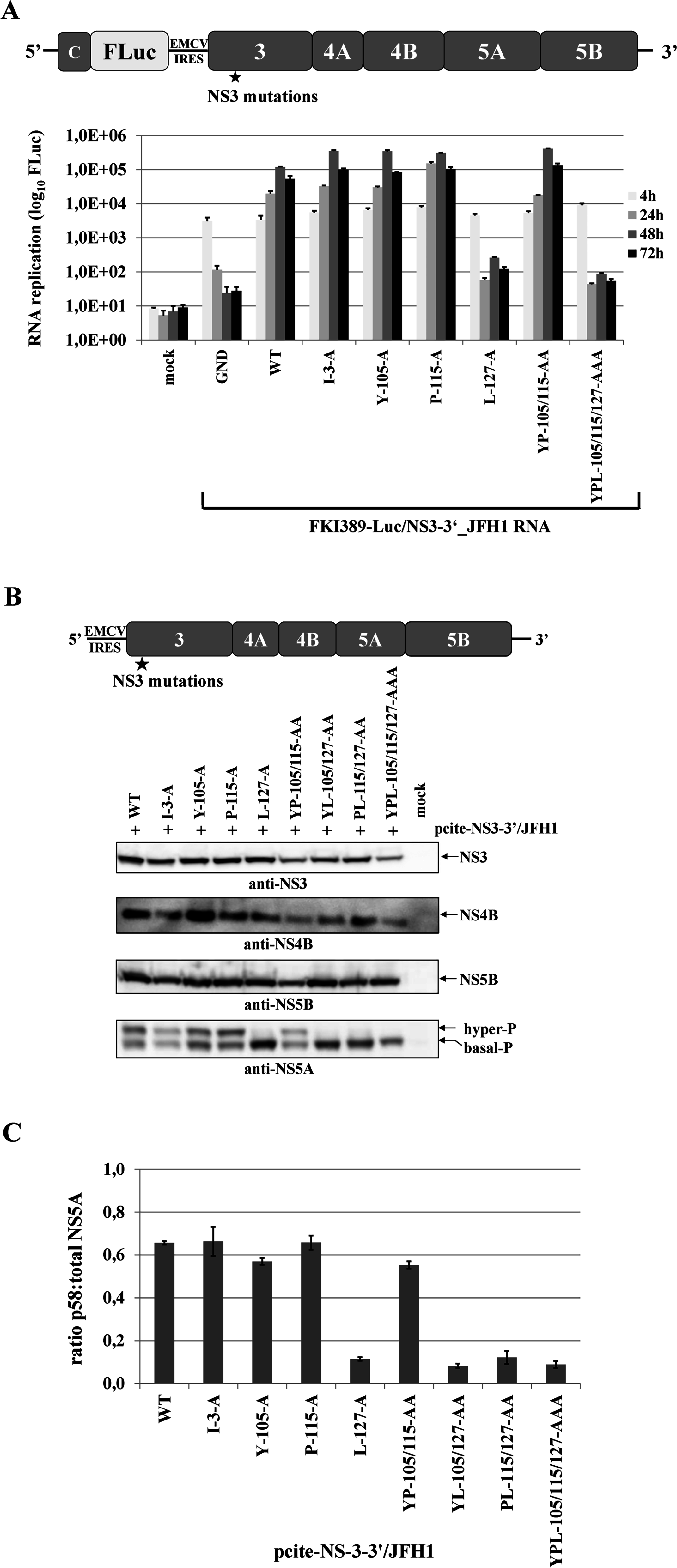 Mutational analysis of the hydrophobic NS3 surface area in the context of a HCV genotype 2a NS3-5B replicon.