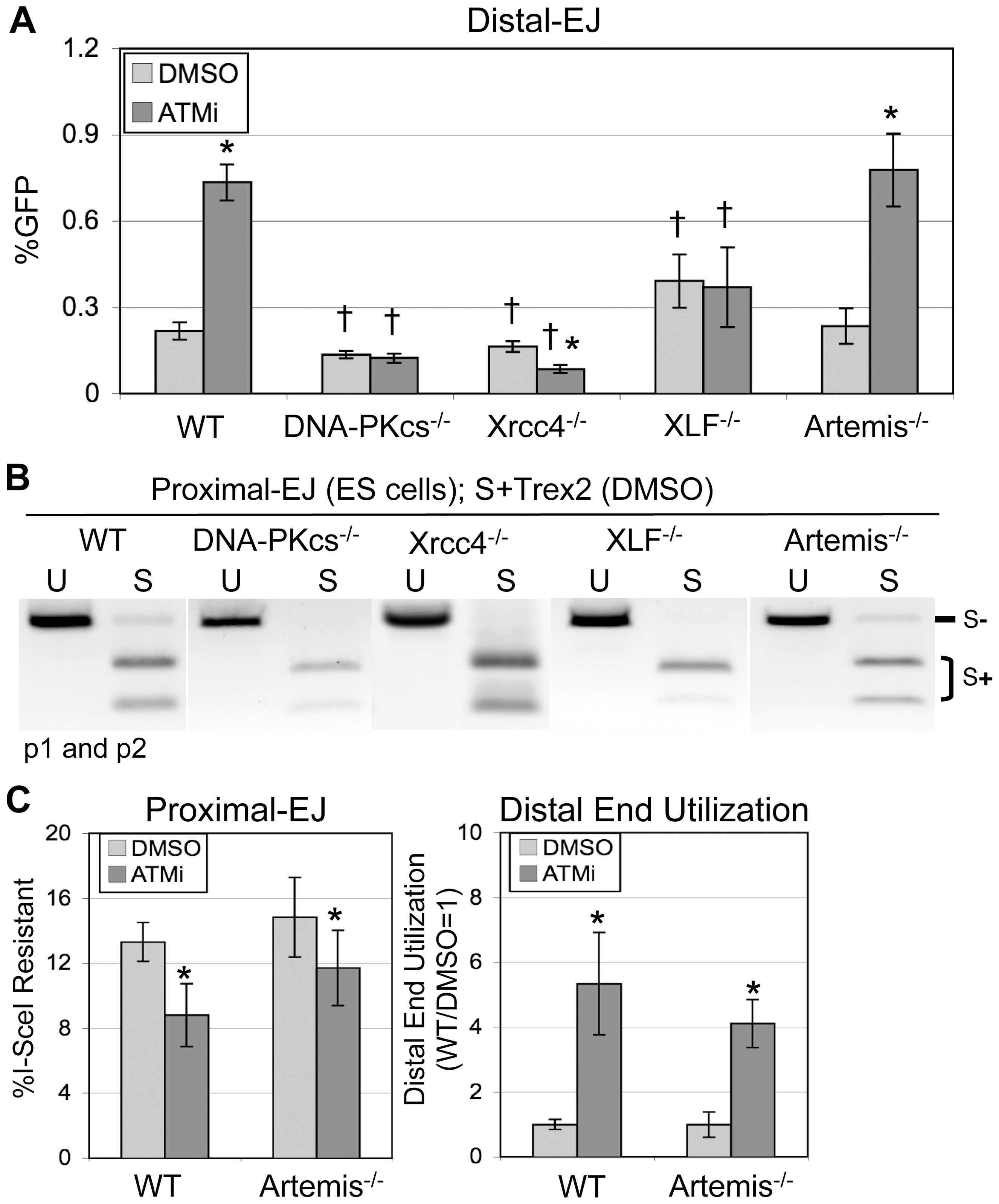 The elevation in Distal-EJ caused by ATMi is dependent on DNA-PKcs, Xrcc4, and XLF, but not Artemis.