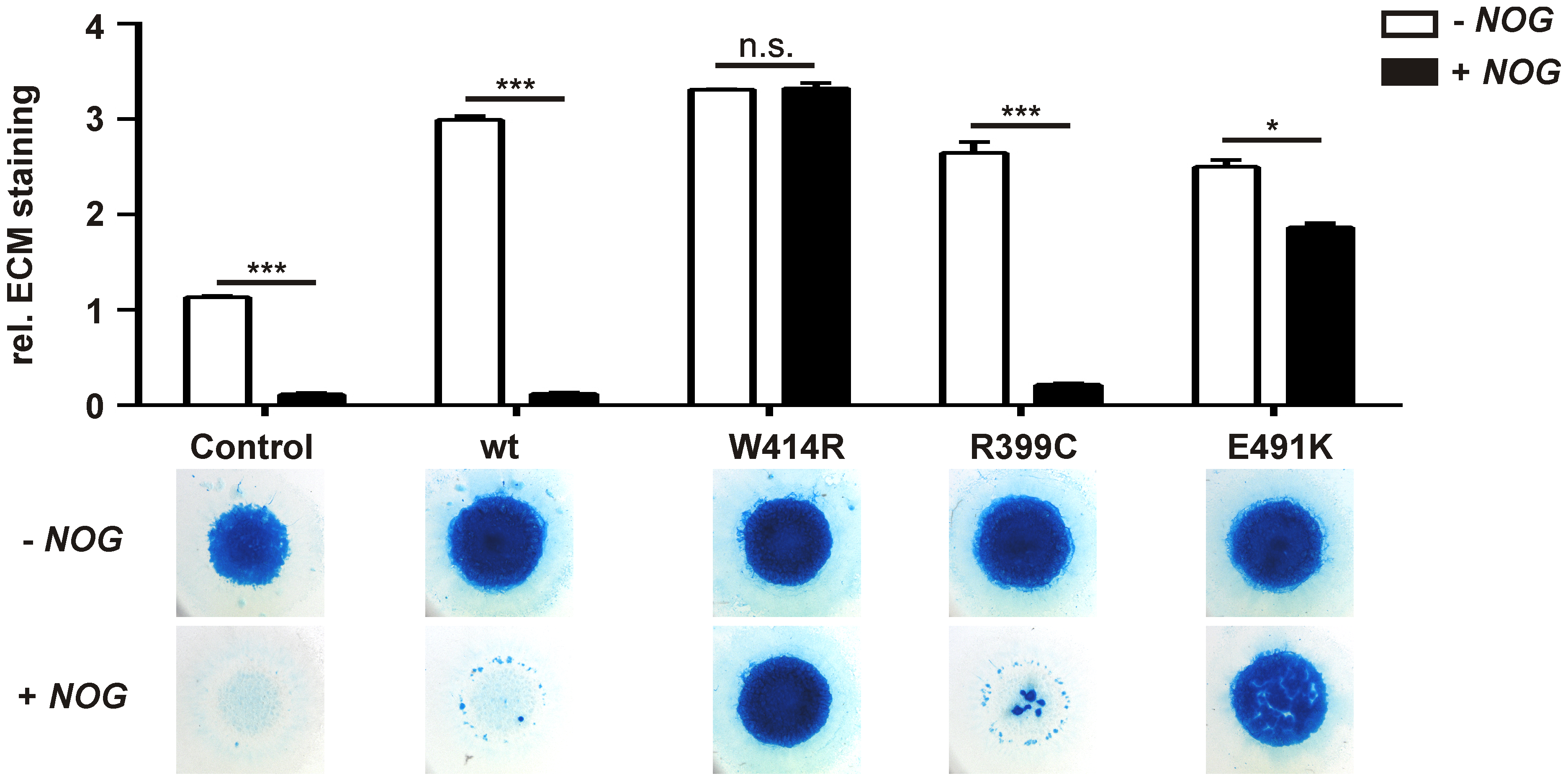 GDF5<sup>W414R</sup> is resistant towards inhibition by NOG in chicken micromass cultures.