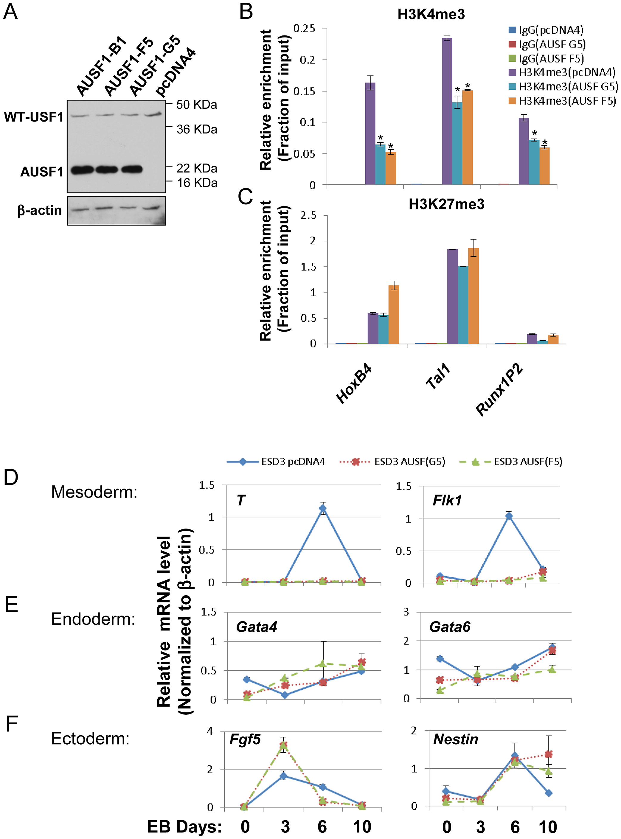 USF1 regulates ESC pluripotency by specifically controlling mesoderm differentiation.