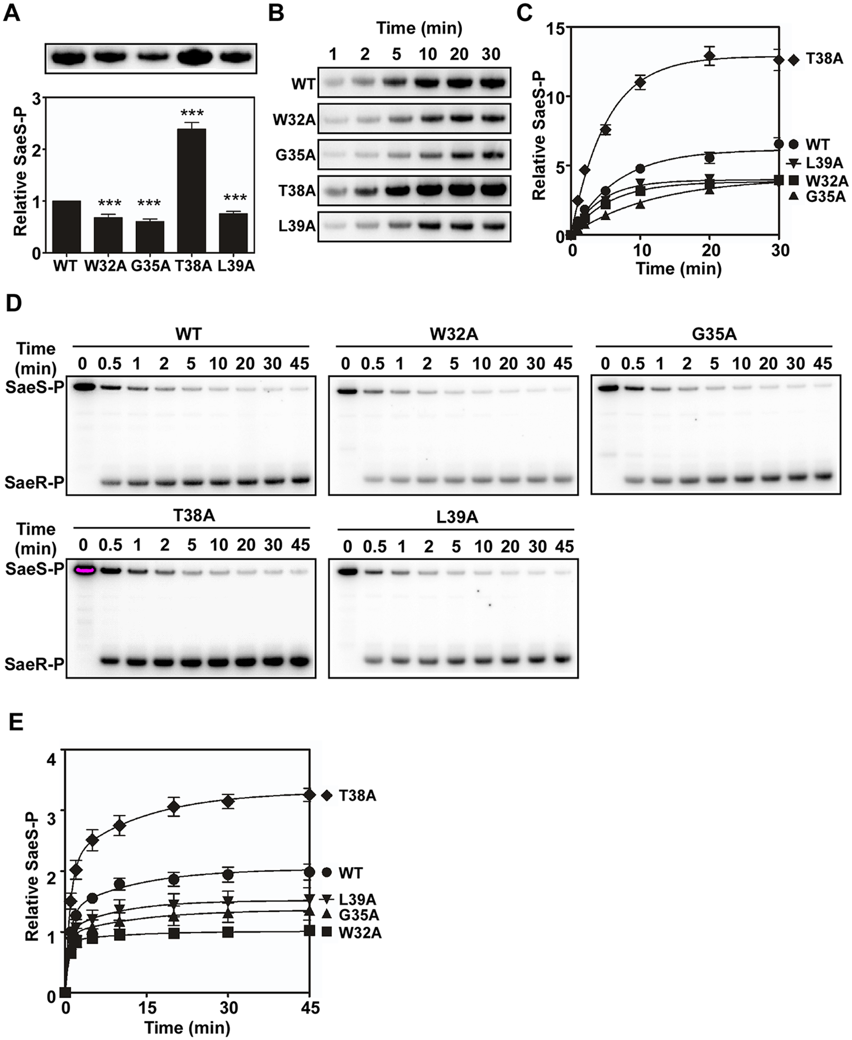 Alanine substitutions in the linker peptide alter the kinase and phosphotransferase activities of SaeS.