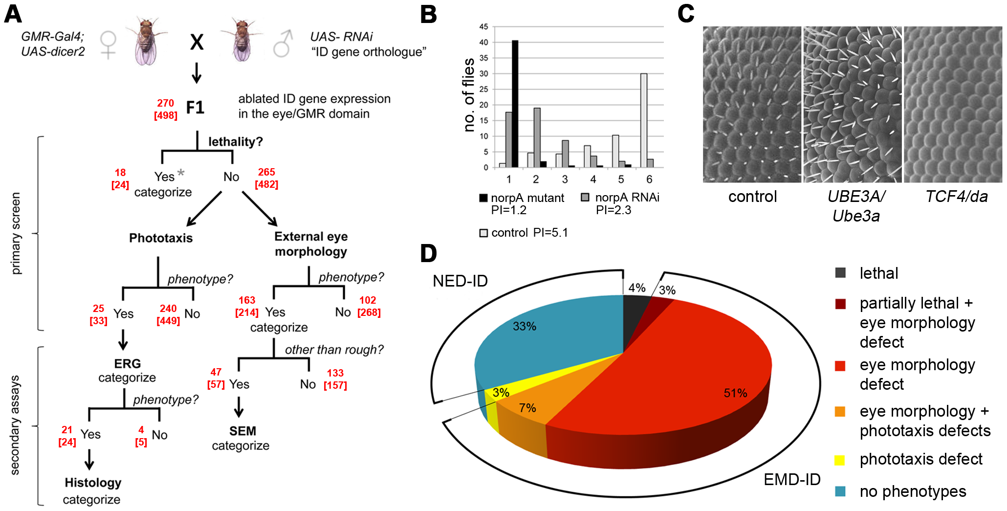 Large scale screen of Intellectual Disability genes in <i>Drosophila</i> and phenotype distribution.