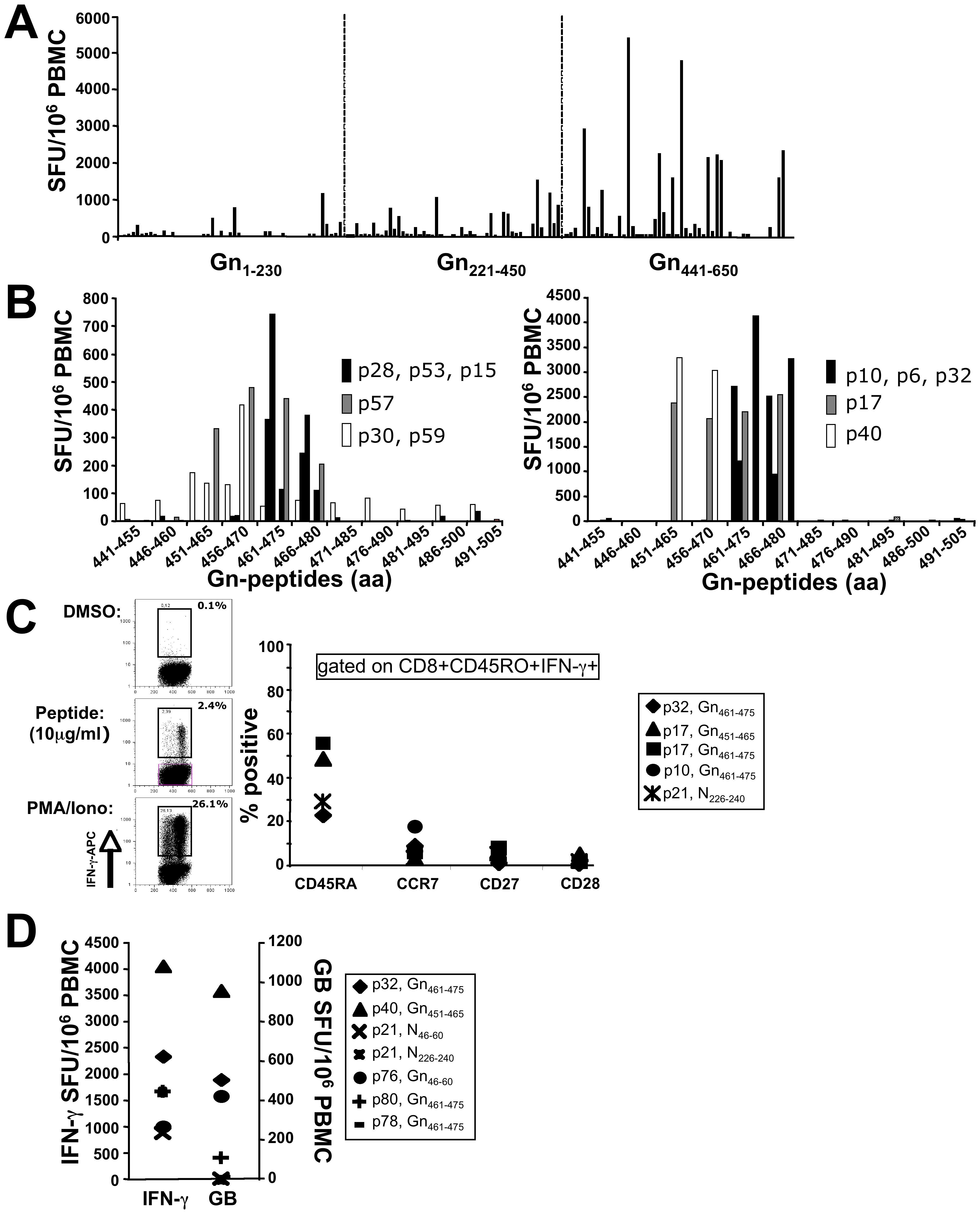 Downmapping of Gn-derived epitopes and characterization of specific T cells.