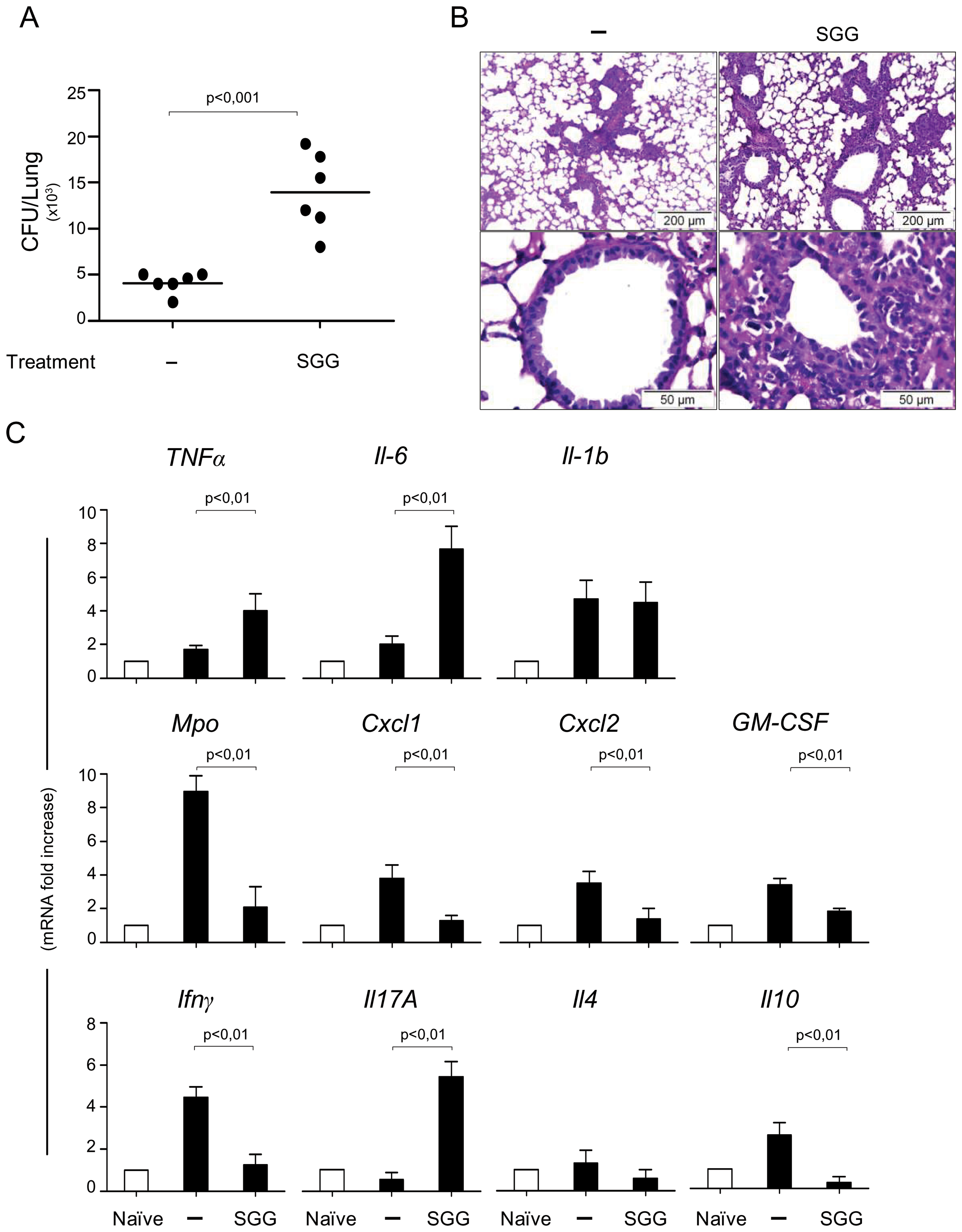 Impact of SGG on primary aspergillosis in intact mice.
