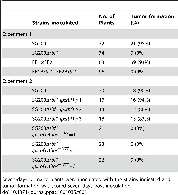 Pathogenicity of <i>rbf1</i> deletion strains.