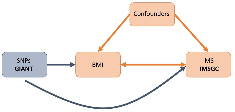 Schematic representation of an MR analysis.