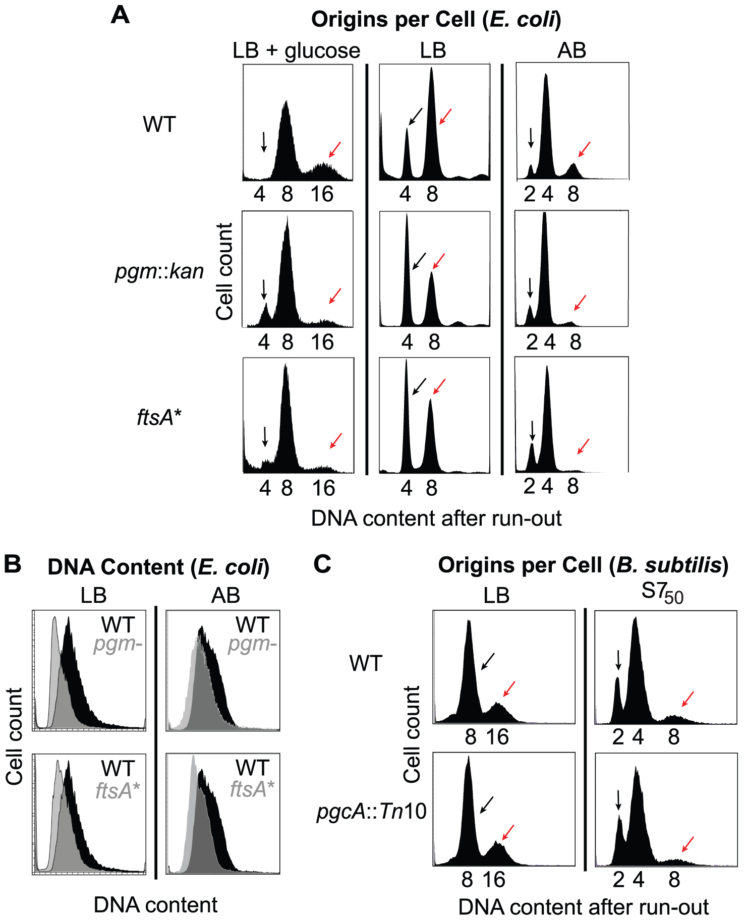 Examination of initiation timing in <i>E. coli</i> and <i>B. subtilis</i>.