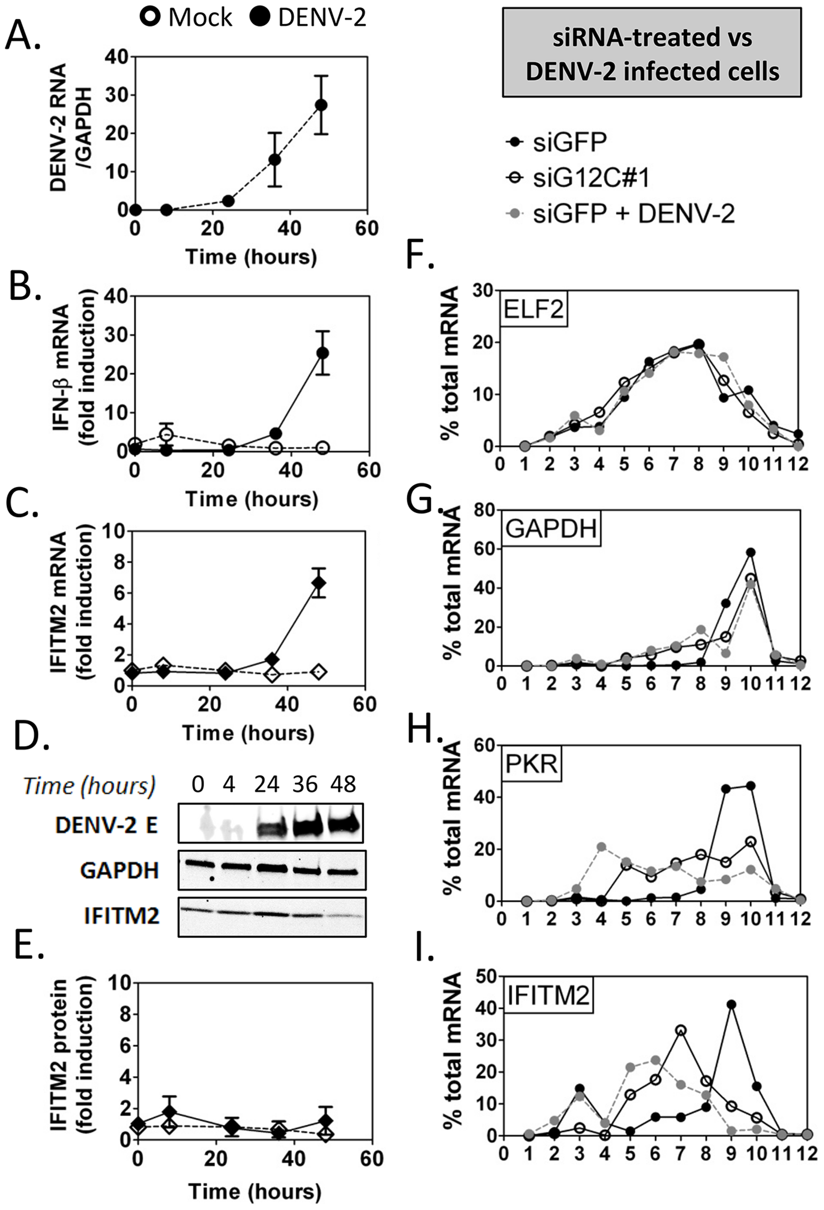 DENV-2 infection interferes with ISG protein expression.