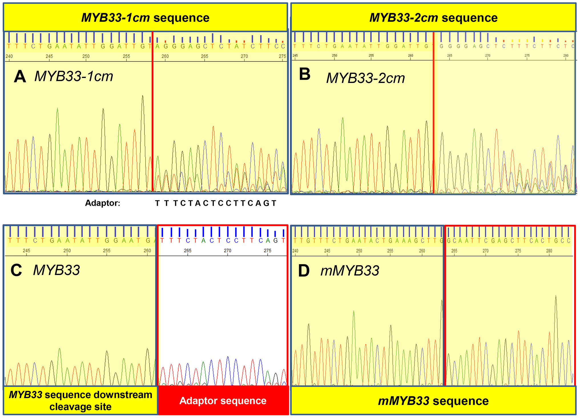 MiR159-guided cleavage is attenuated in <i>MYB33-1 cm</i> and <i>MYB33-2 cm</i> plants.