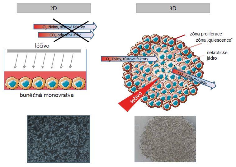 Schematické zobrazení rozdílů 2D a 3D kultivačních metod.