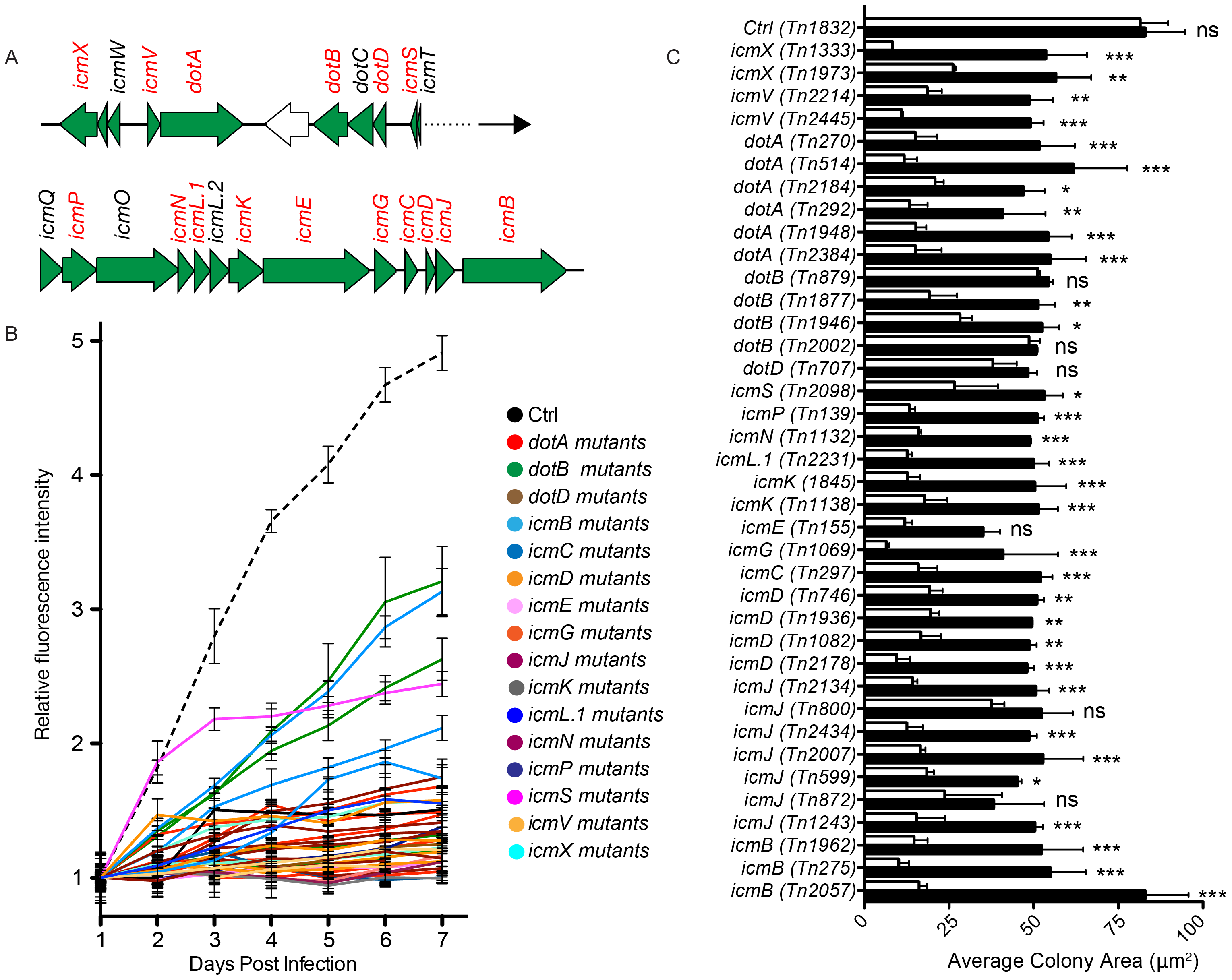 Role of Dot/Icm core proteins in <i>Coxiella</i> infections.