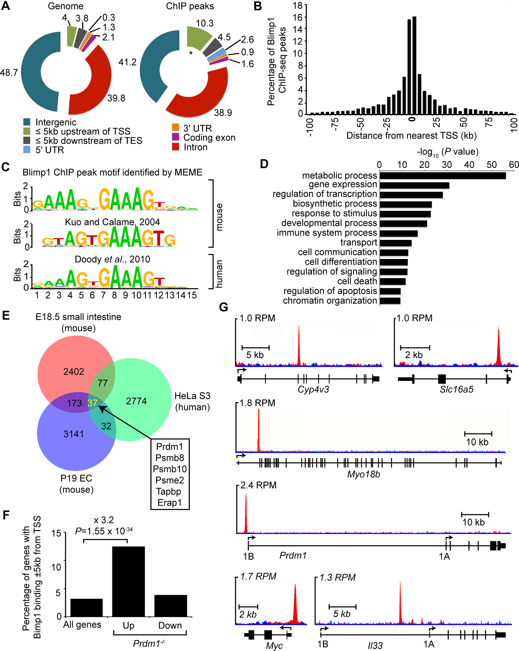 ChIP-seq analysis of genome-wide Blimp1 binding sites in E18.5 small intestine.