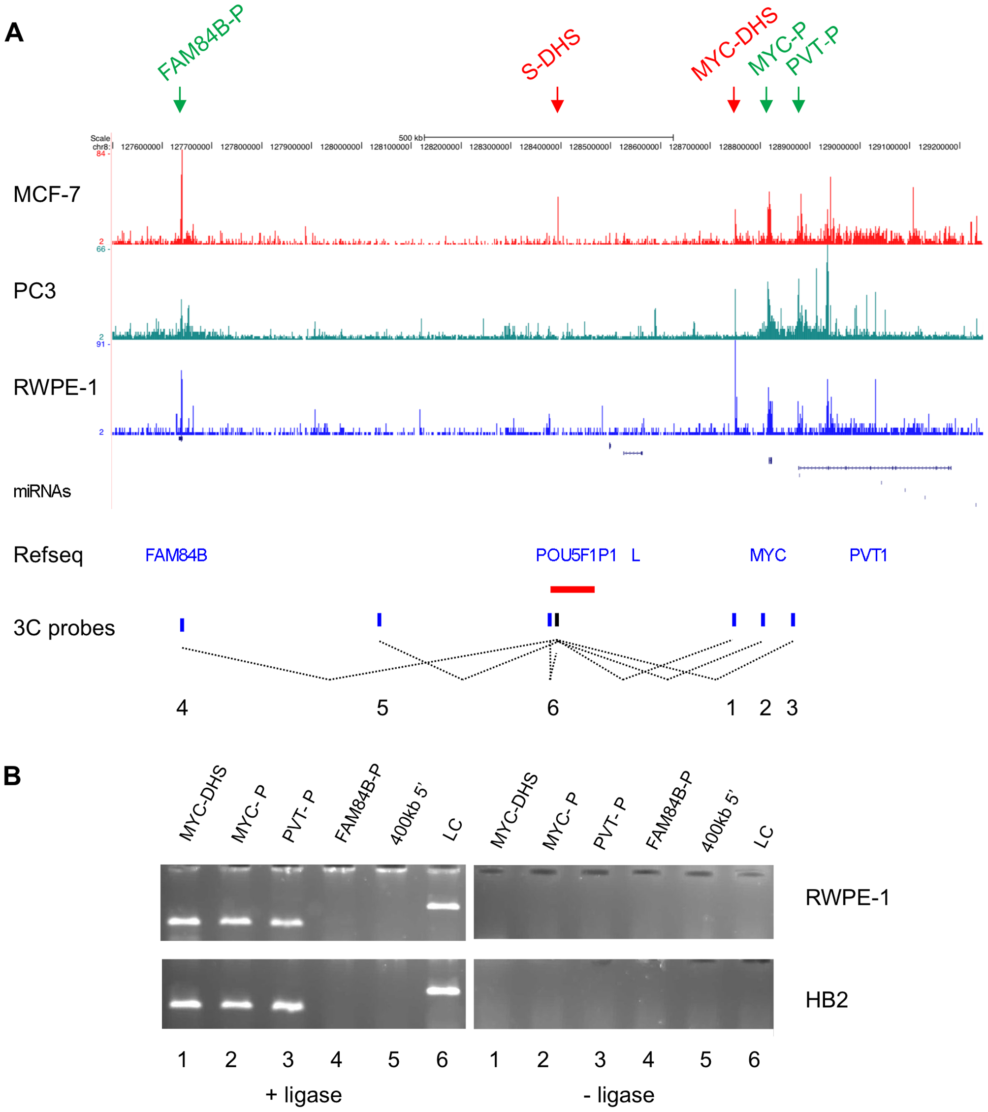 Chromatin conformation at the 8q24 locus.
