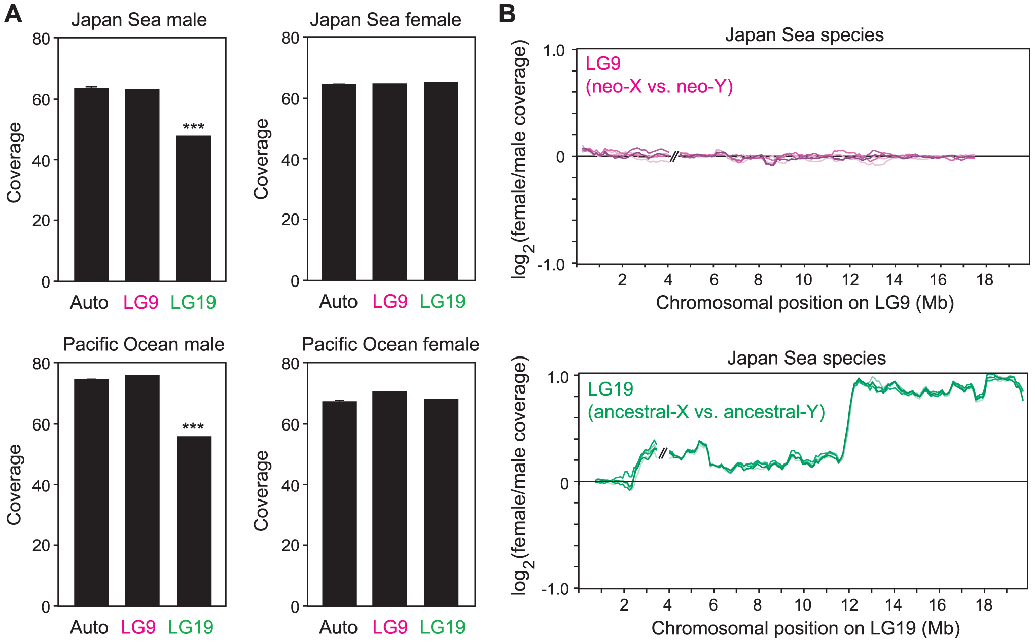 The absence of large-scale degeneration on the Japan Sea neo-Y chromosome.