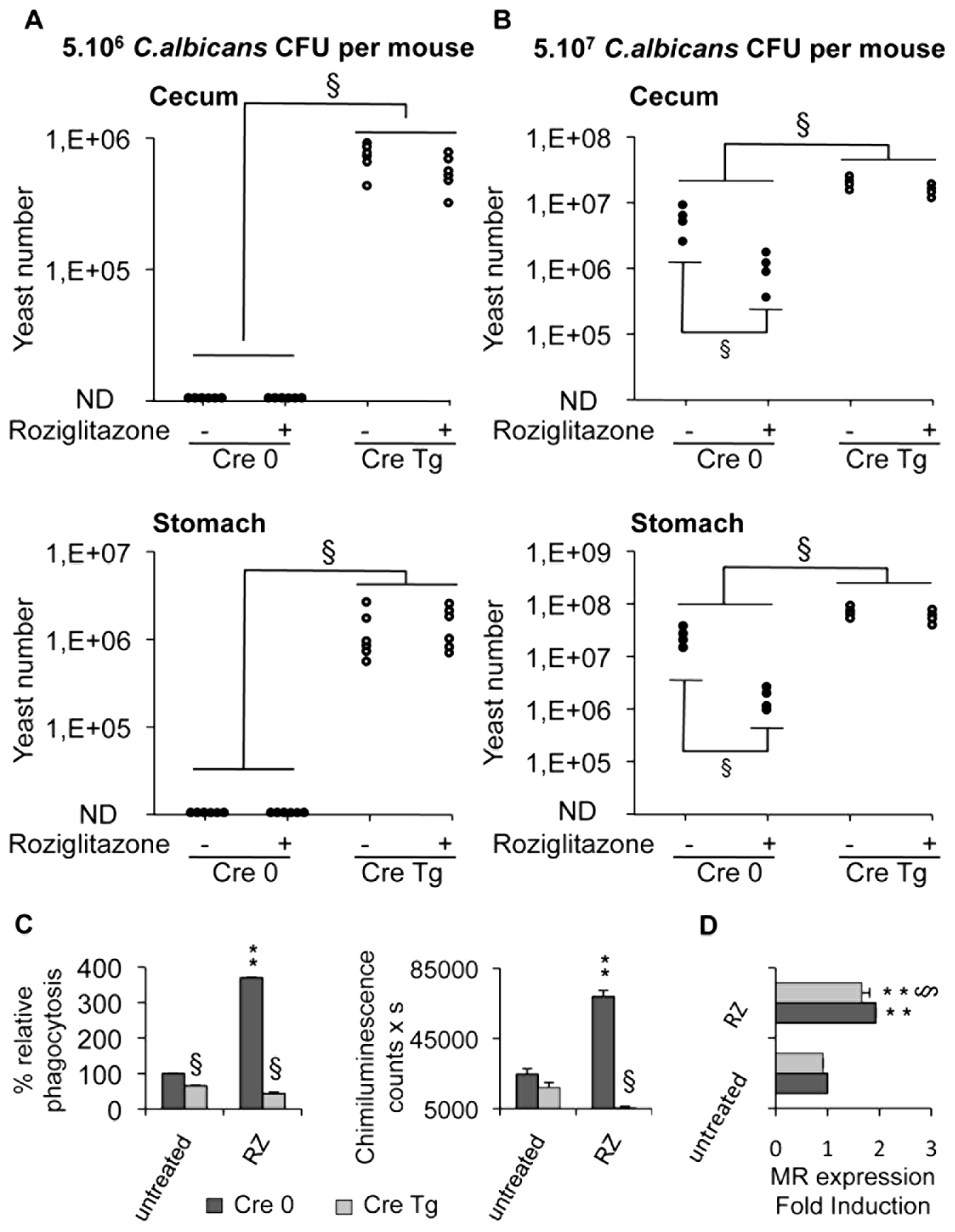 Dectin-1-knockout mice are more susceptible than Dectin-1-wildtype mice to <i>C. albicans</i> gastrointestinal infection.