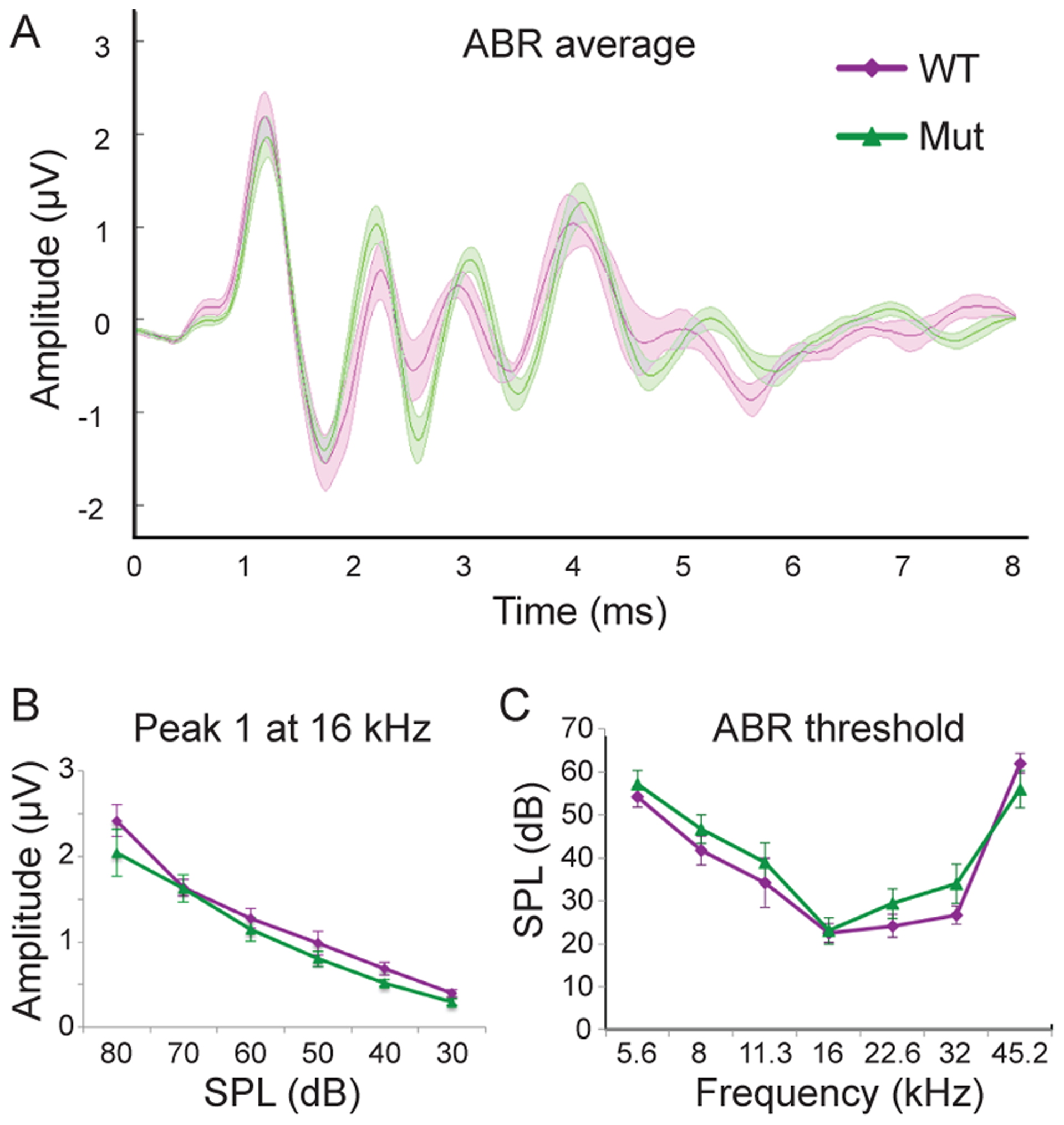 <i>Npr2</i> mutants show normal auditory responses.