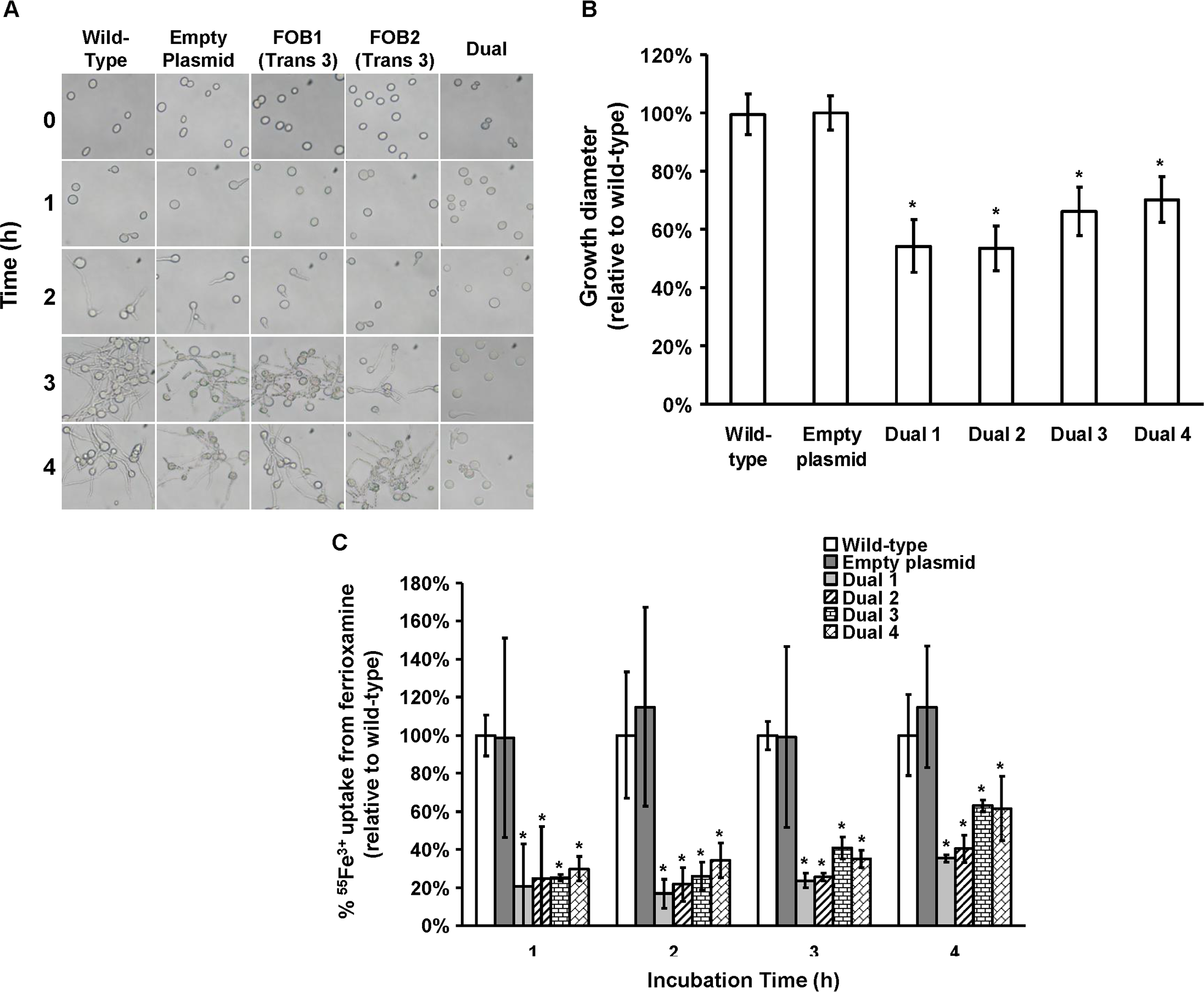 Dual gene inhibition significantly attenuated the ability of <i>R. oryzae</i> to germinate, grow and take up iron from ferrioxamine.