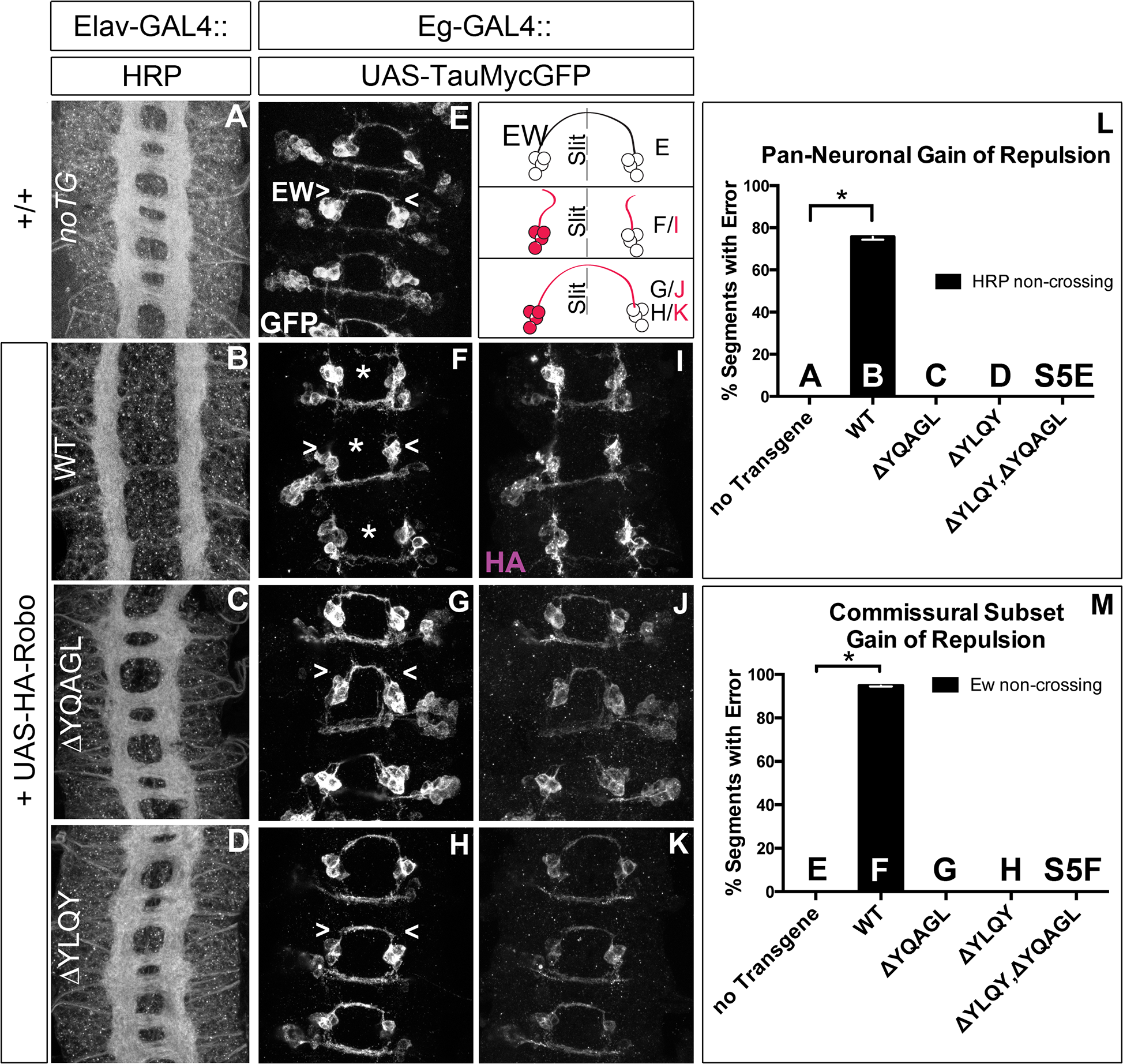 Endocytosis motifs are required for ectopic repulsion <i>in vivo</i>.