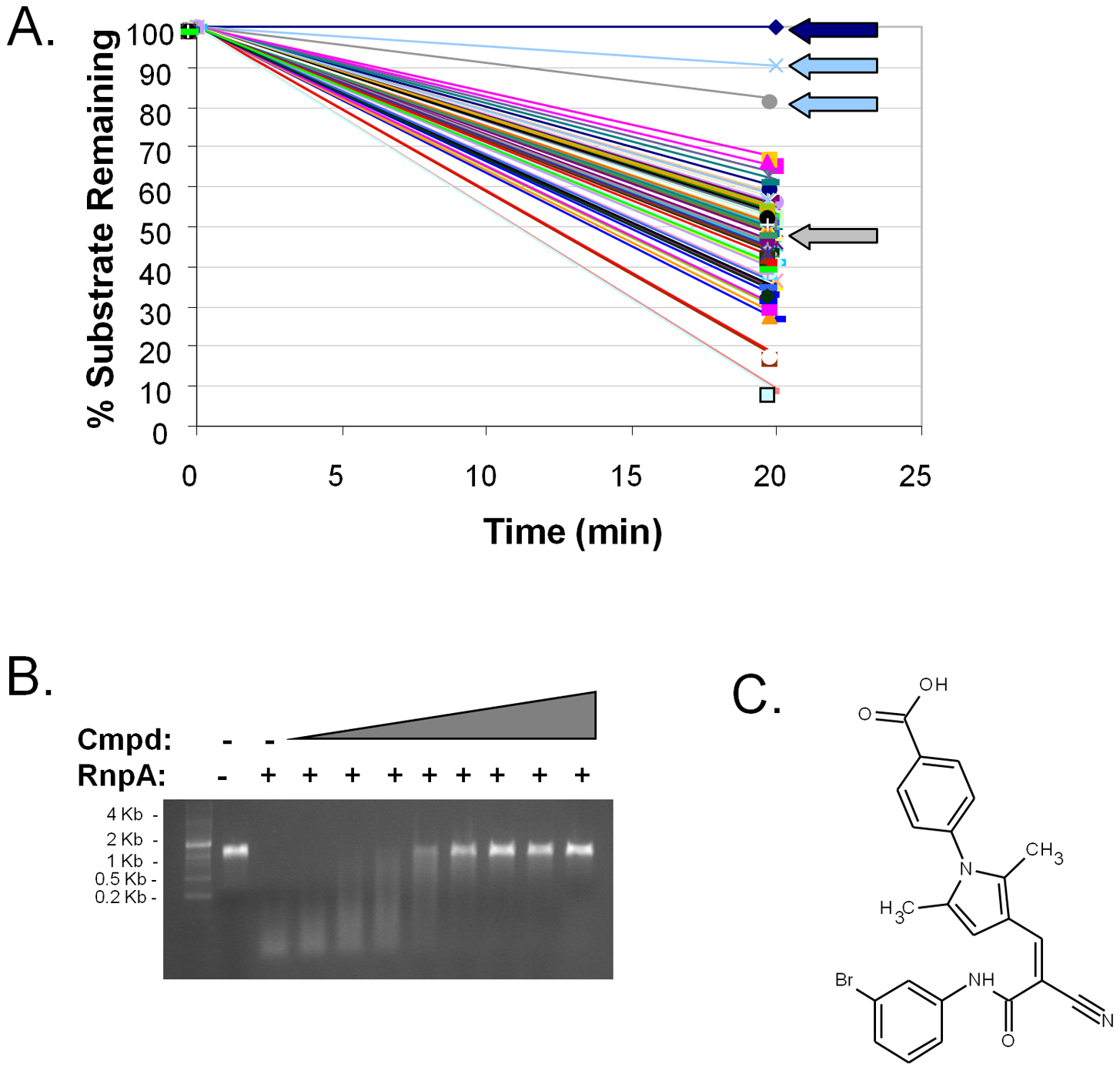 Identification of small molecule inhibitors of RnpA-mediated RNA degradation.