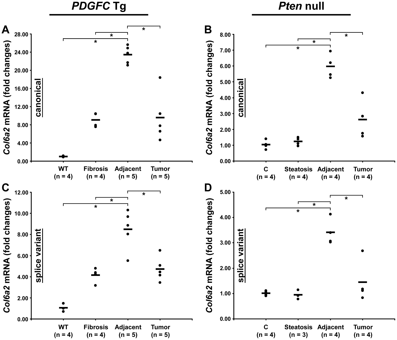 Expression of <i>Col6a2</i> mRNA variants upon disease progression in <i>PDGFC</i> Tg and <i>Pten</i> null liver.