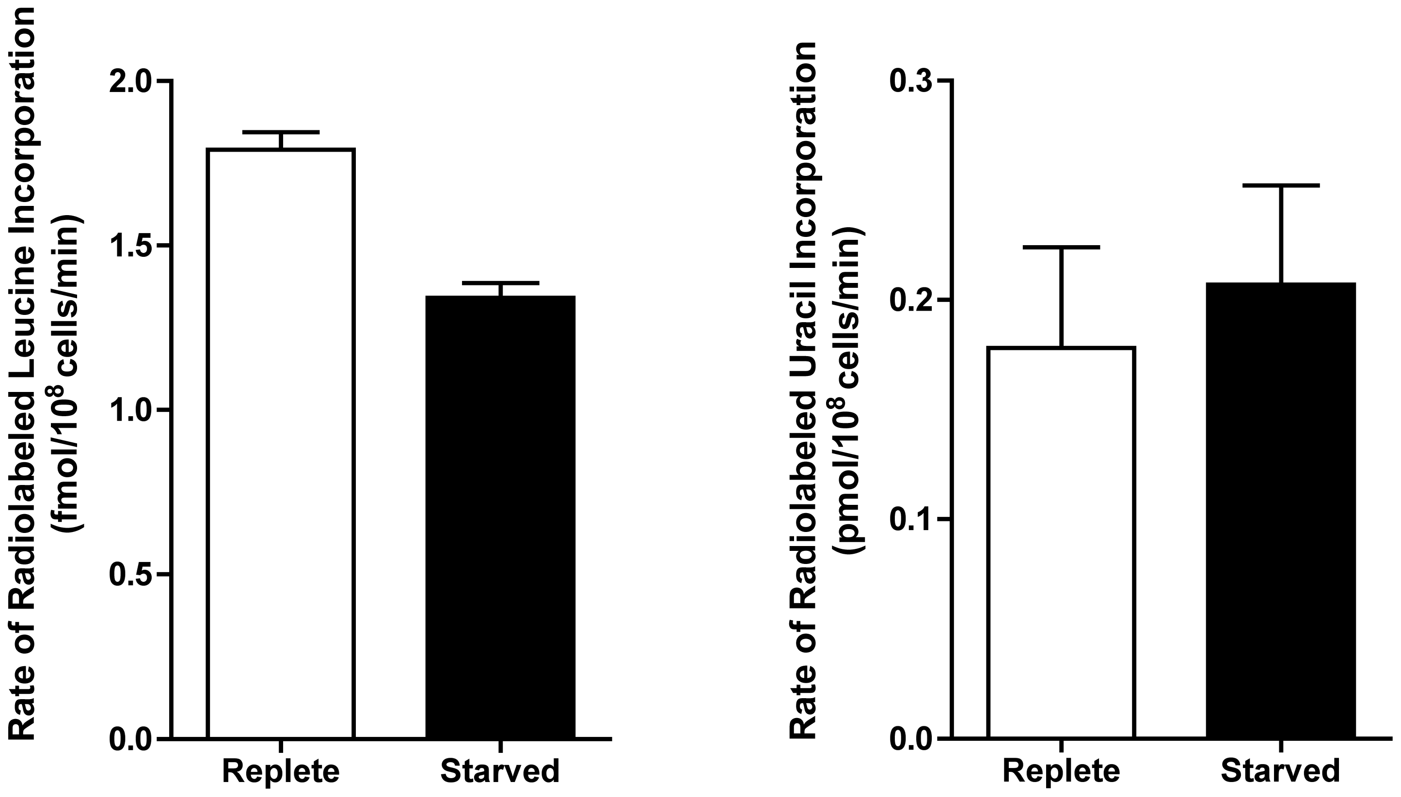 Rate of incorporation of radiolabeled leucine and uracil into purine-starved and purine-replete cells.