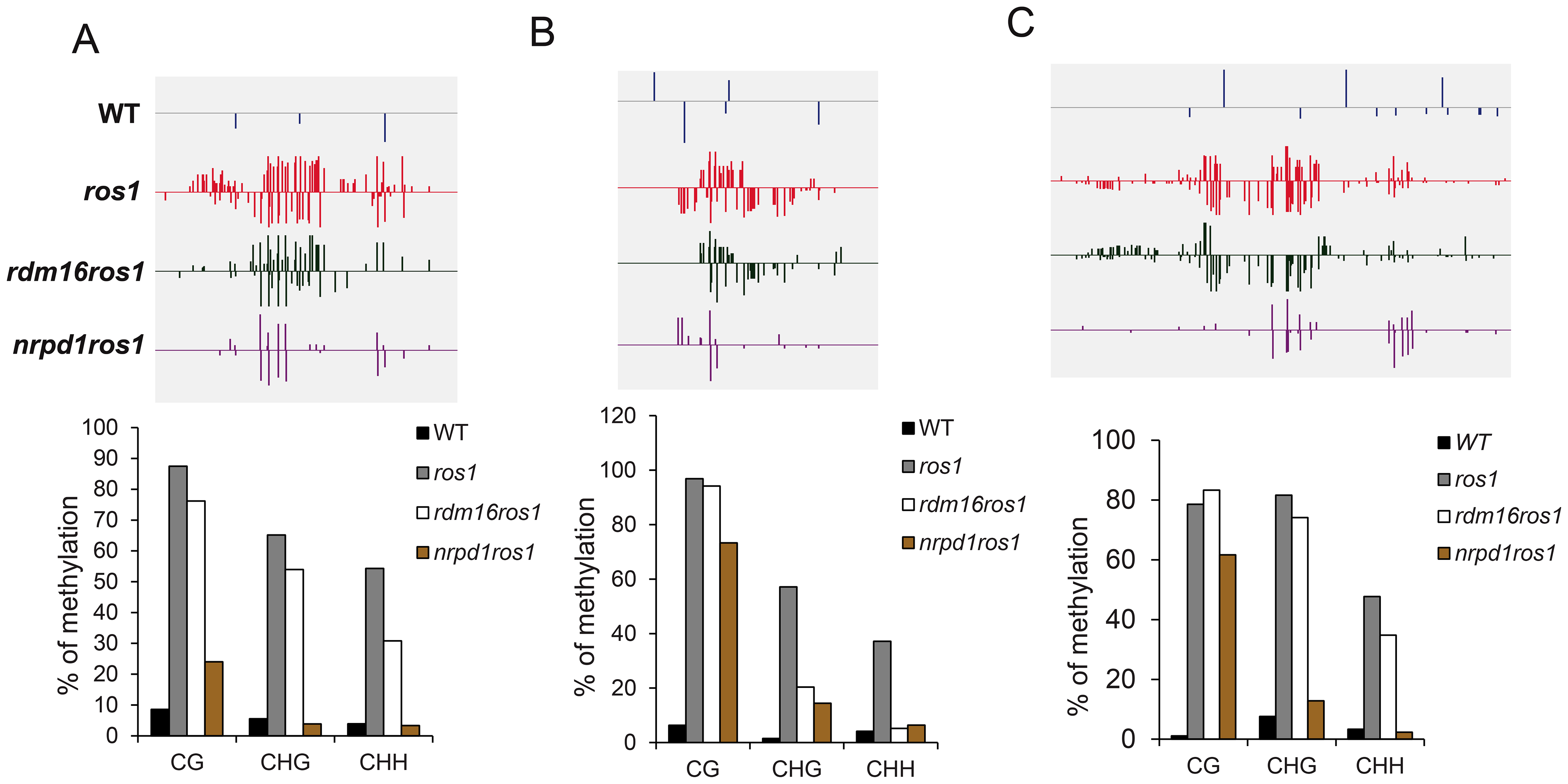DNA methylation analysis of selected loci in WT, <i>ros1</i>, <i>rdm16ros1</i> and <i>nrpd1ros1</i>.