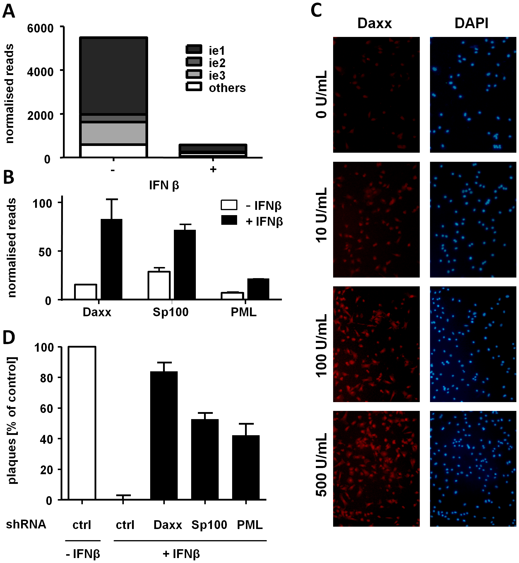 IFNβ suppresses MCMV IE gene expression at the transcriptional level by inducing ND10 genes.