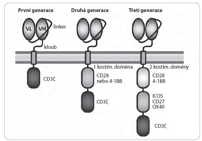 Struktura chimérického antigenního receptoru (CAR).