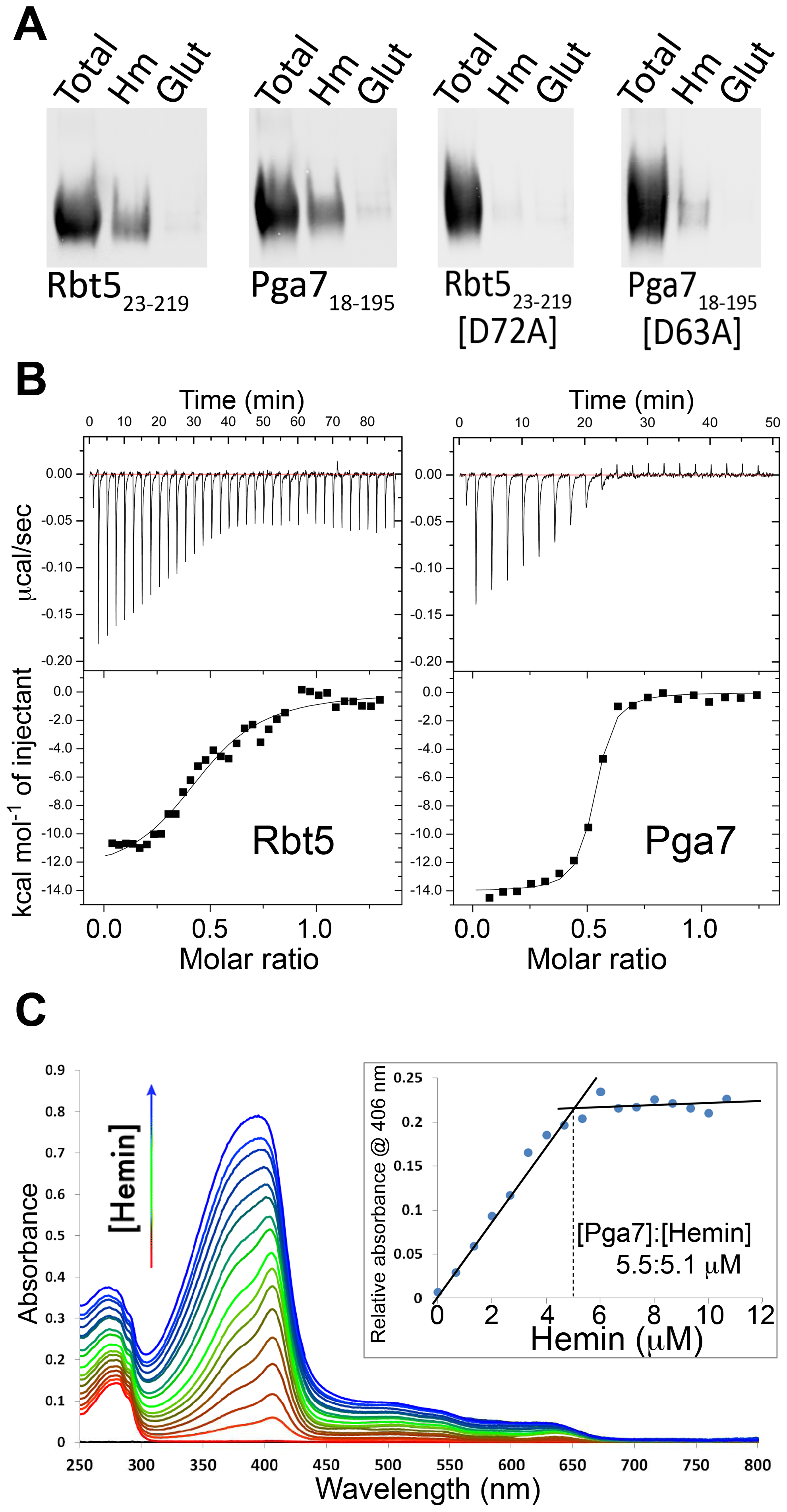 Interaction of Pga7 and Rbt5 with heme.